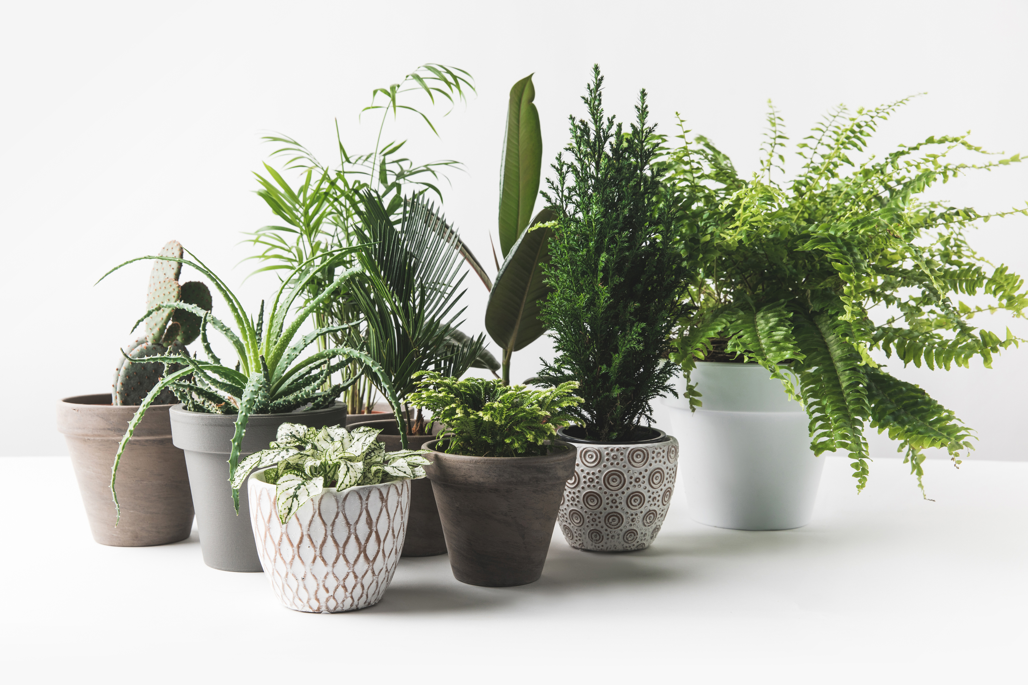 Try to reproduce the same conditions outdoors for your indoor plants (iStock/PA)