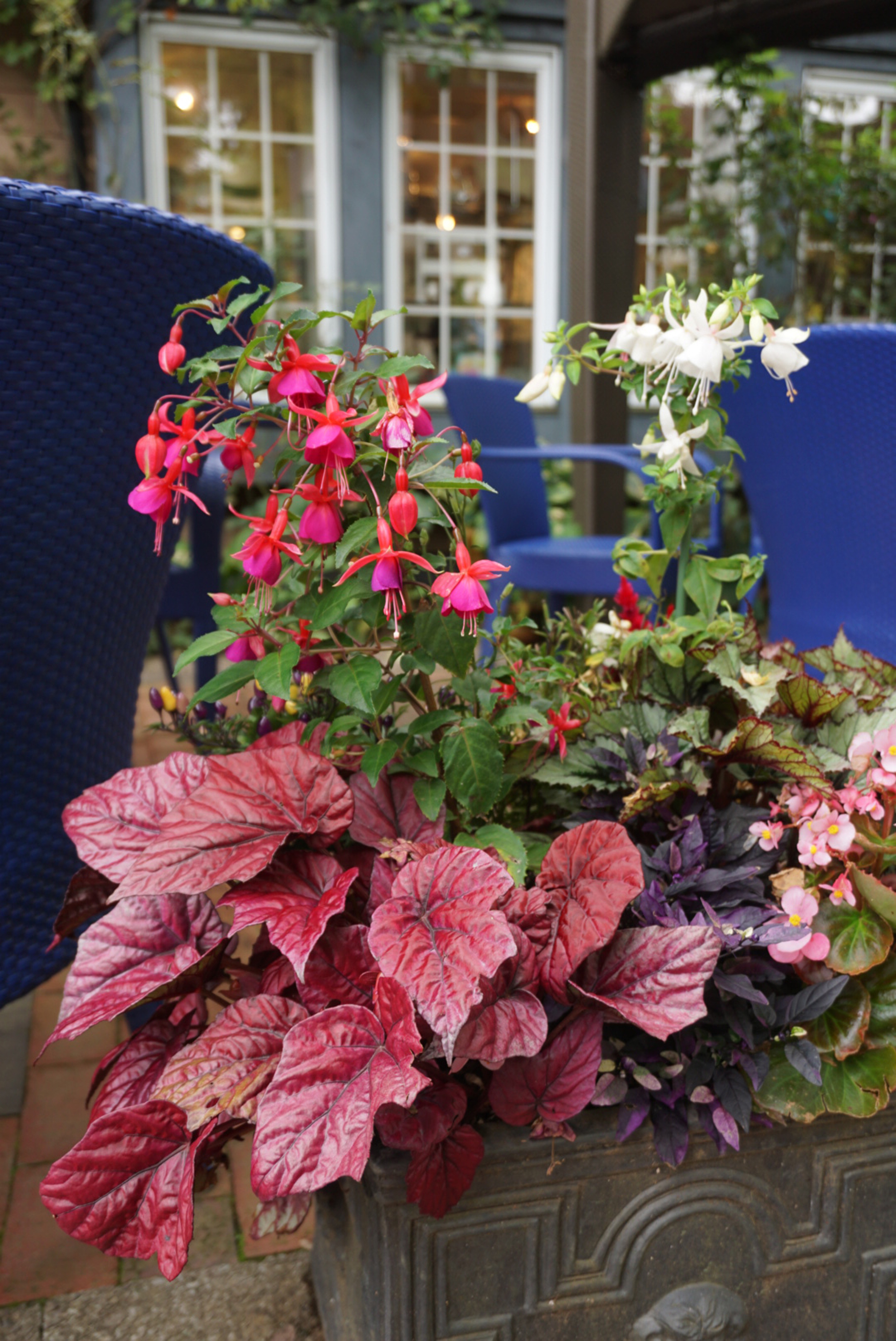 Broad-leaved begonias make a good foil for fuchsias (Michael Perry/PA)
