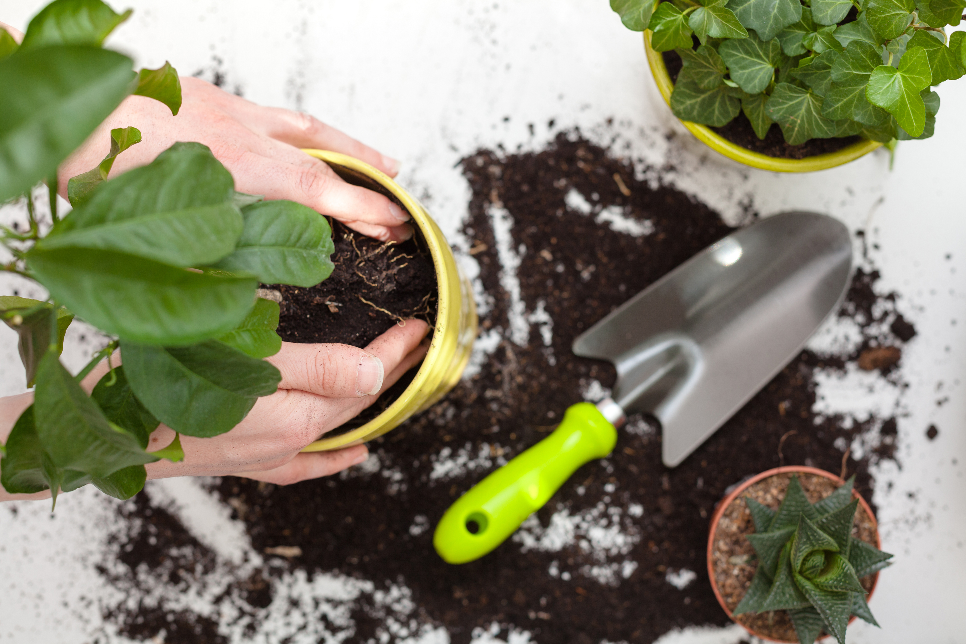Repot your houseplant outside (iStock/PA)