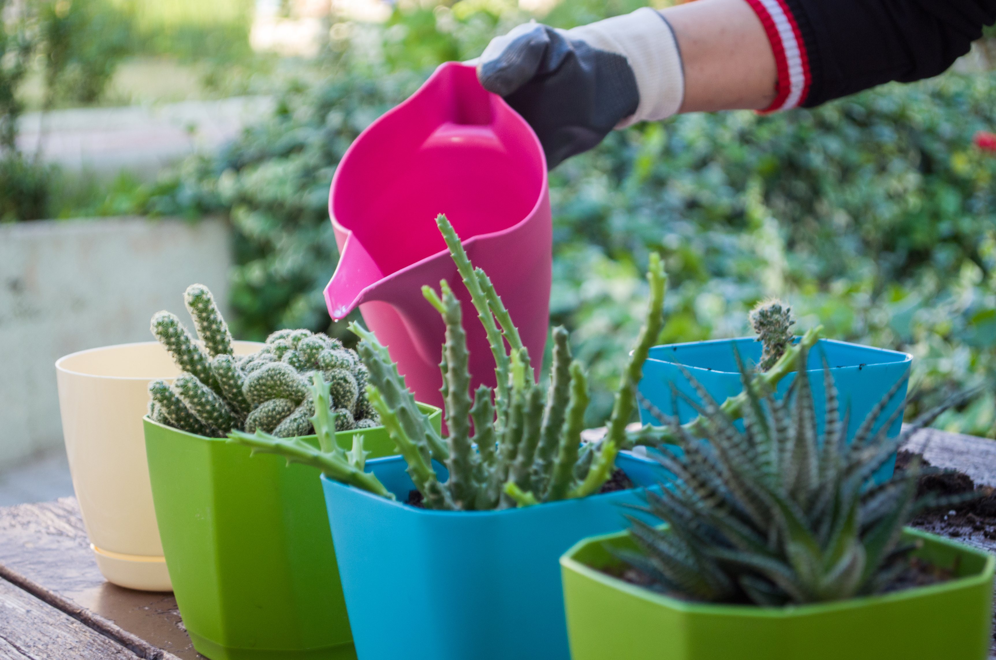 You may need to water plants a little more regularly when they are outside (iStock/PA)