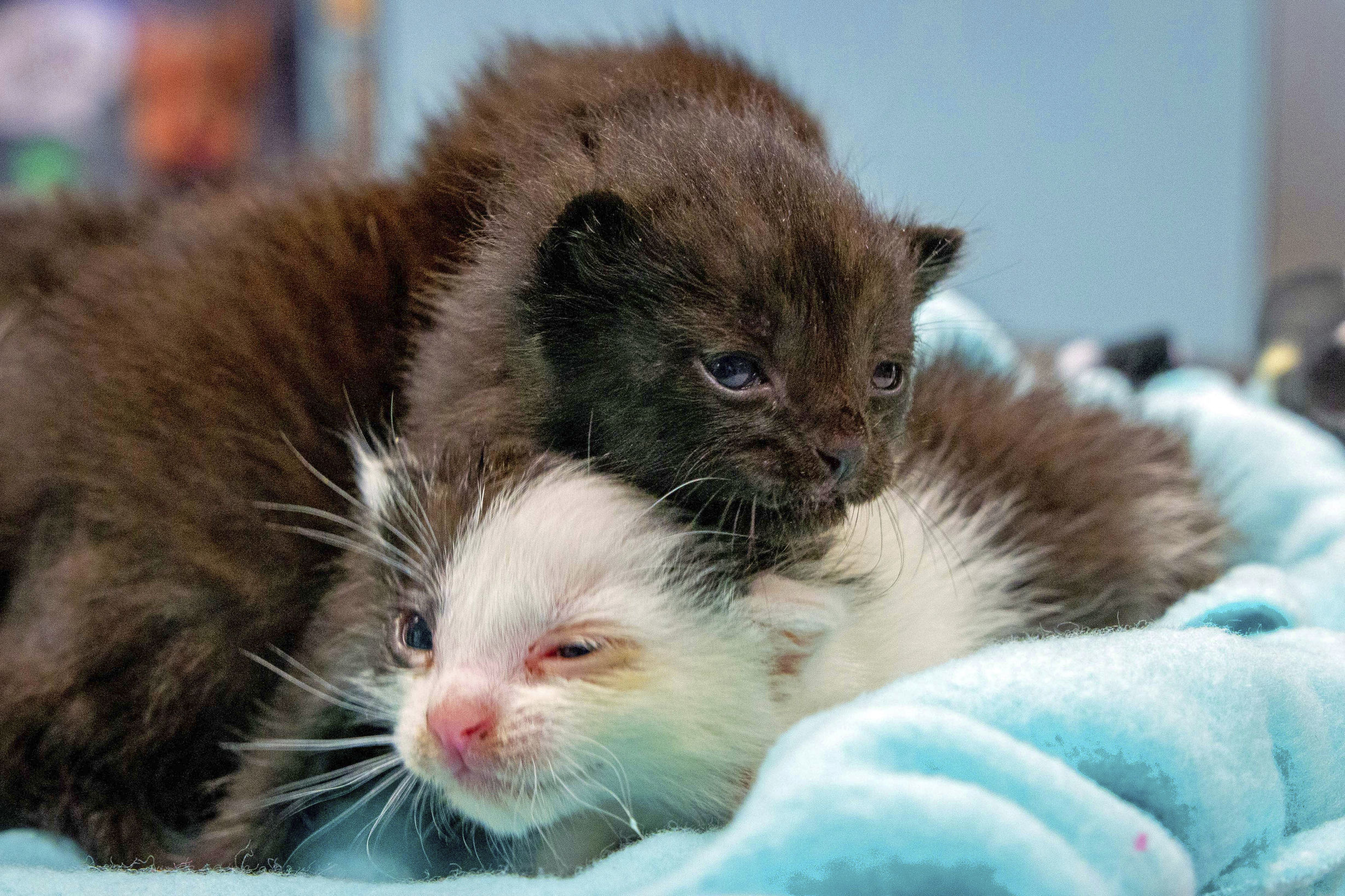 The kittens were found inside a a 60ft steel column