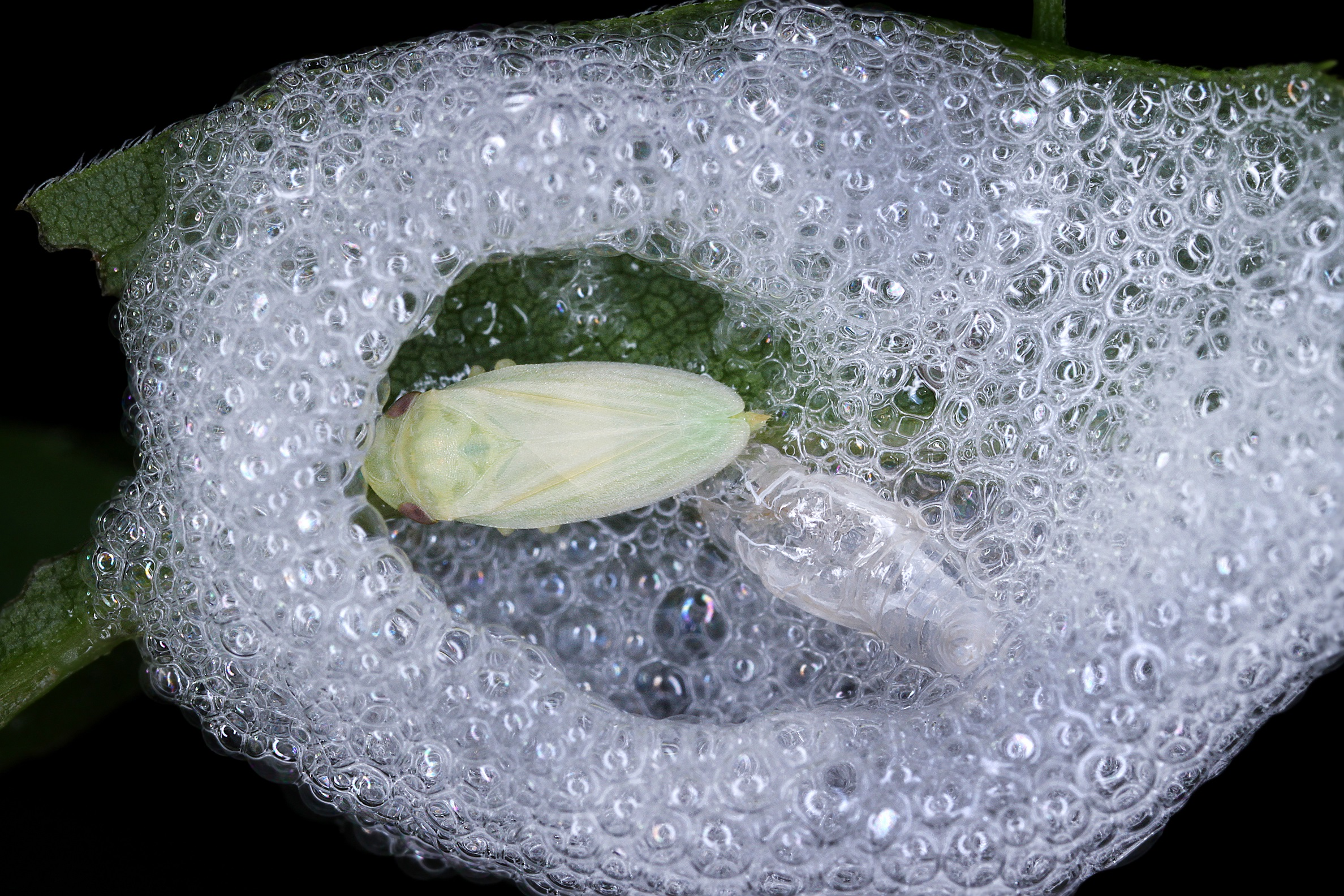 Gardeners have been asked to spot spittle on leaves in their garden. (Gernot Kunz/PA)