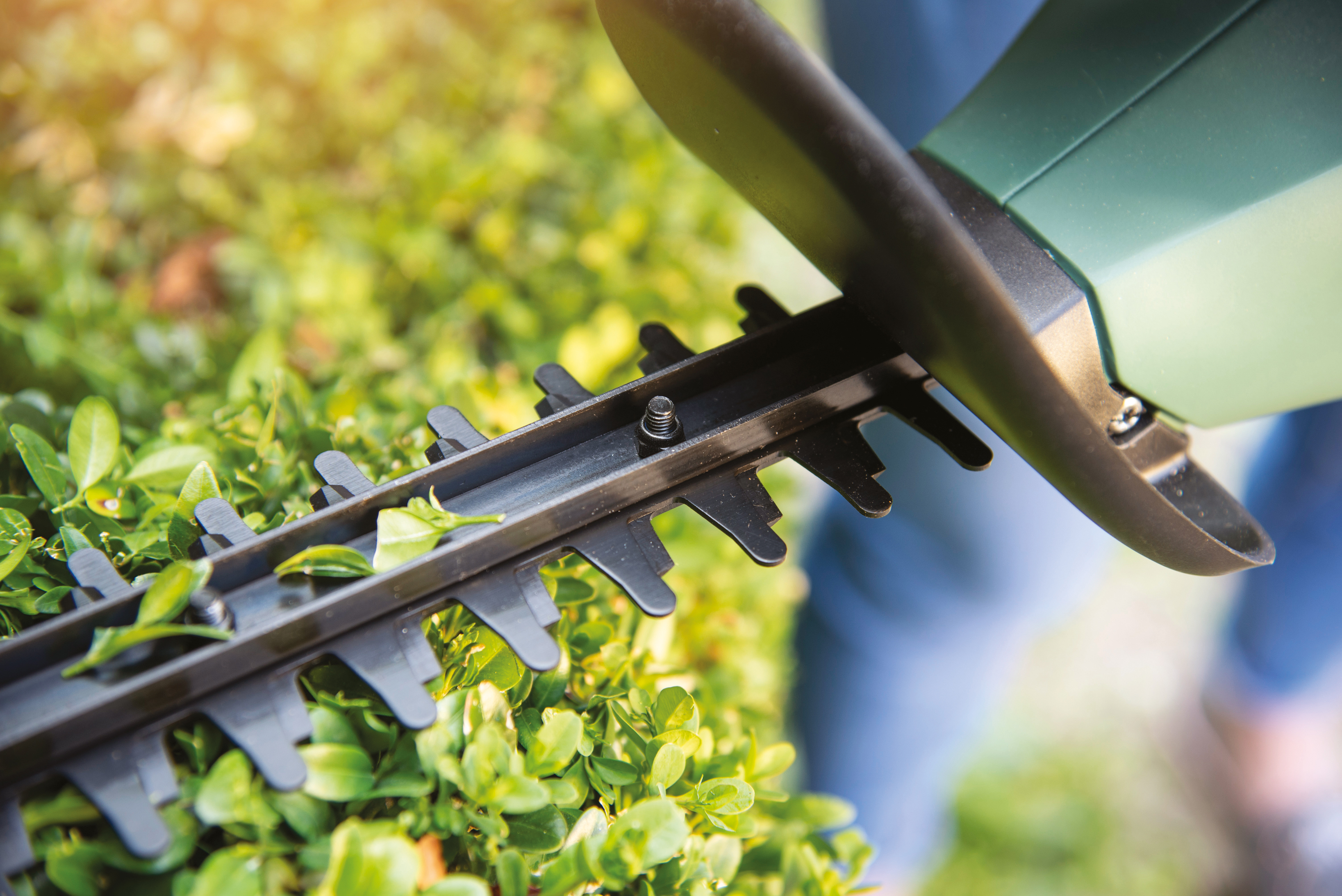 Make light work of hedge-trimming with a new cordless trimmer (Bosch/PA)