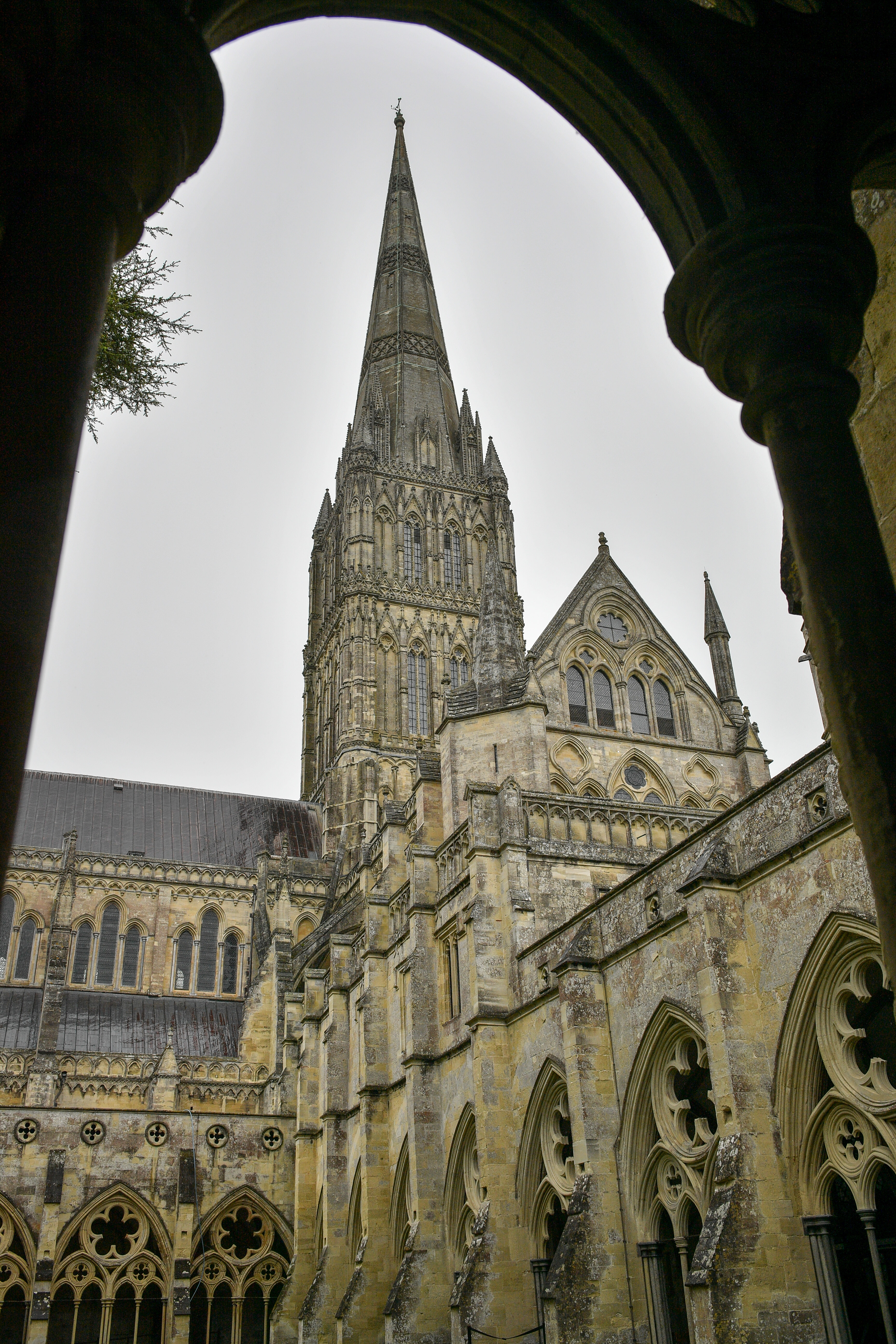 Peregrine chicks at Salisbury Cathedral