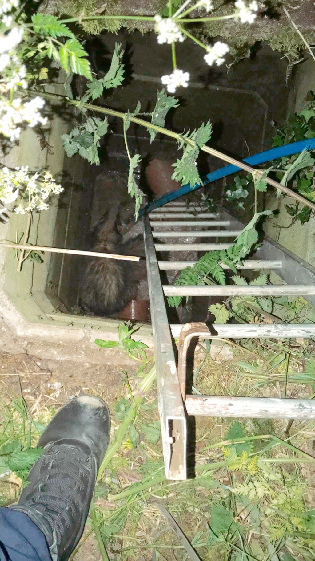 The badgers were found down a 10 foot-deep drainage shaft (RSPCA/PA)