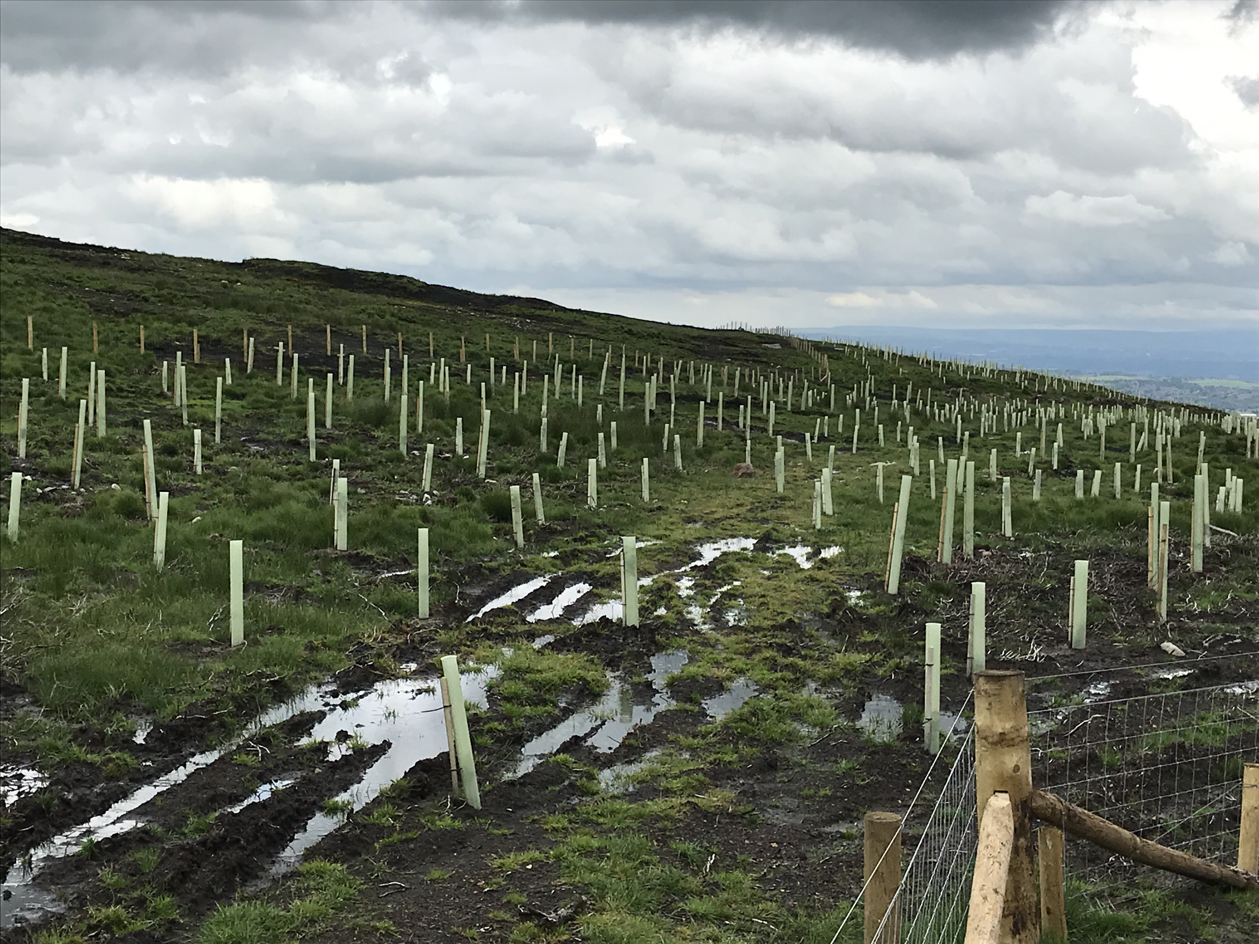 New trees are being planted at the site (Andy Bond/WTML/PA)