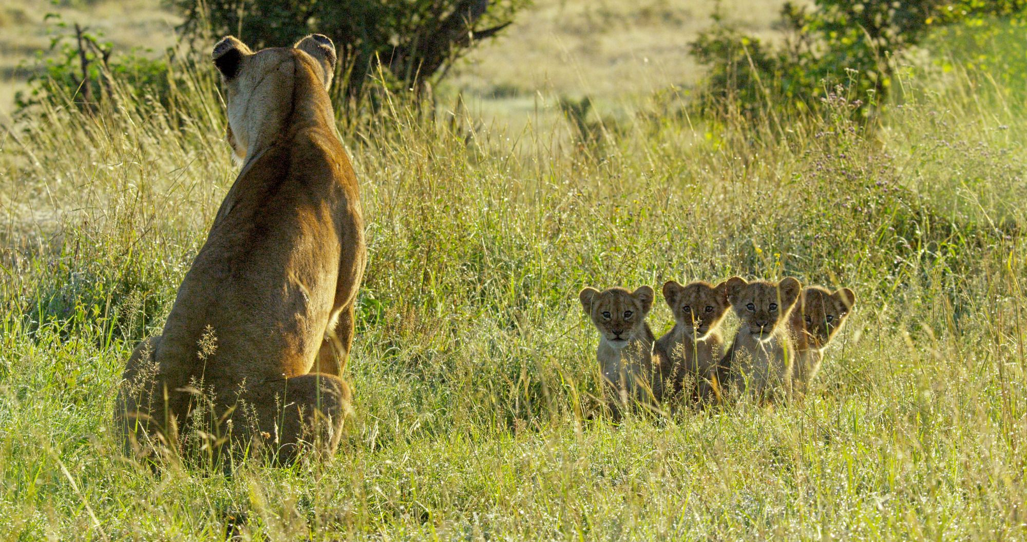 A scene from Serengeti (Richard Jones/John Downer Productions/PA)