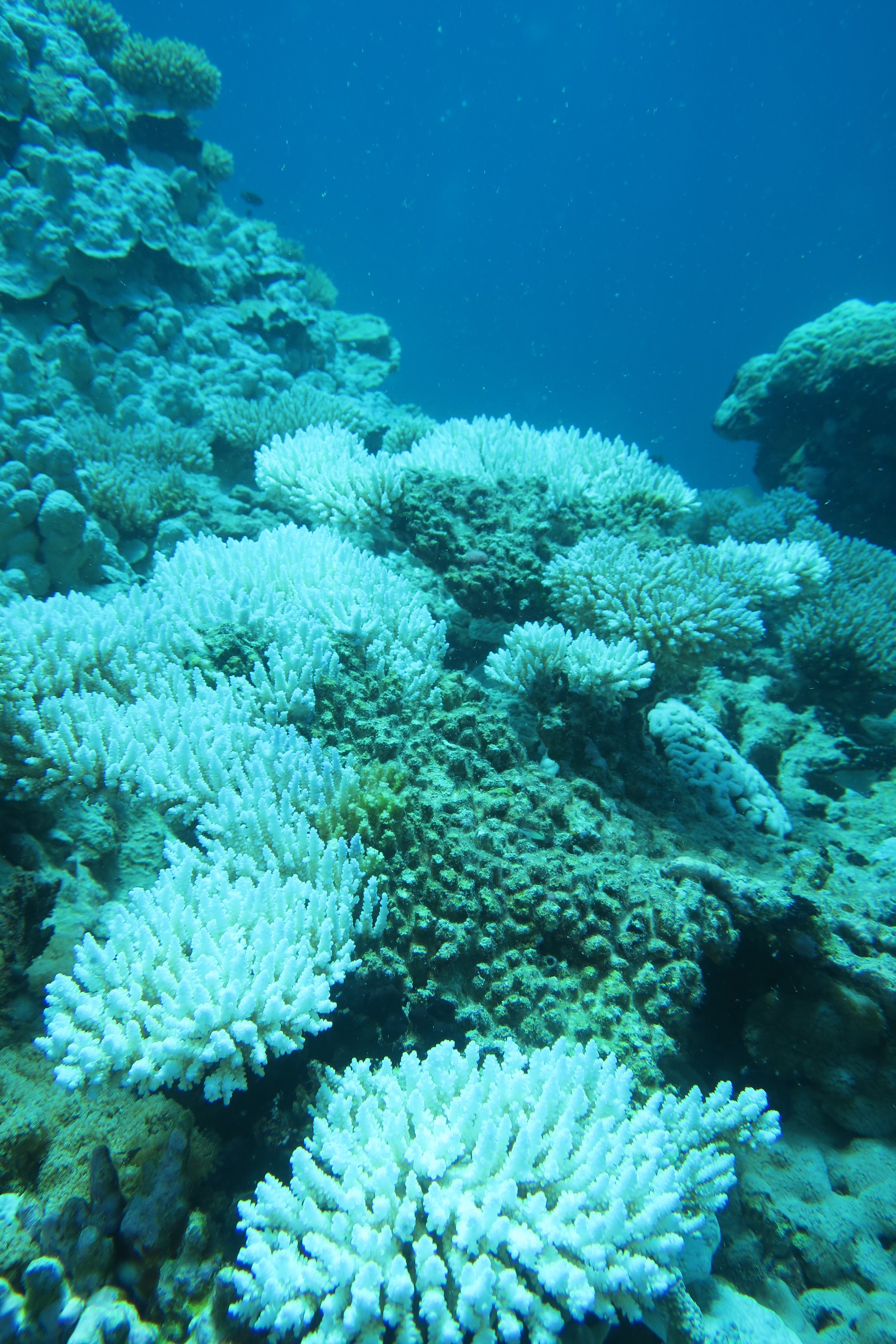 Ocean heatwaves left coral reef in the British Indian Ocean Territory bleached and dead (ZSL/PA)