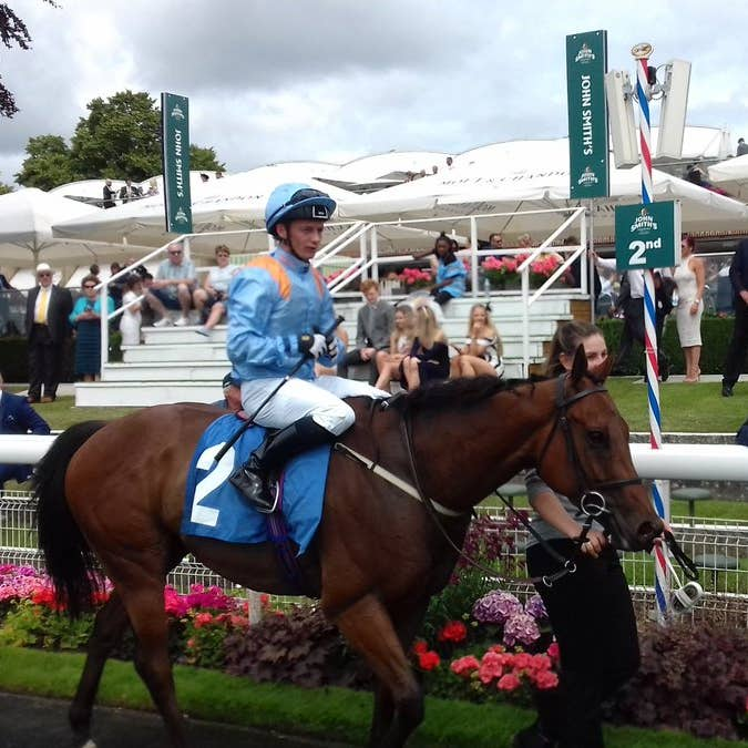 Copper Knight could be set for bigger things after his victory in the City Walls Stakes at York