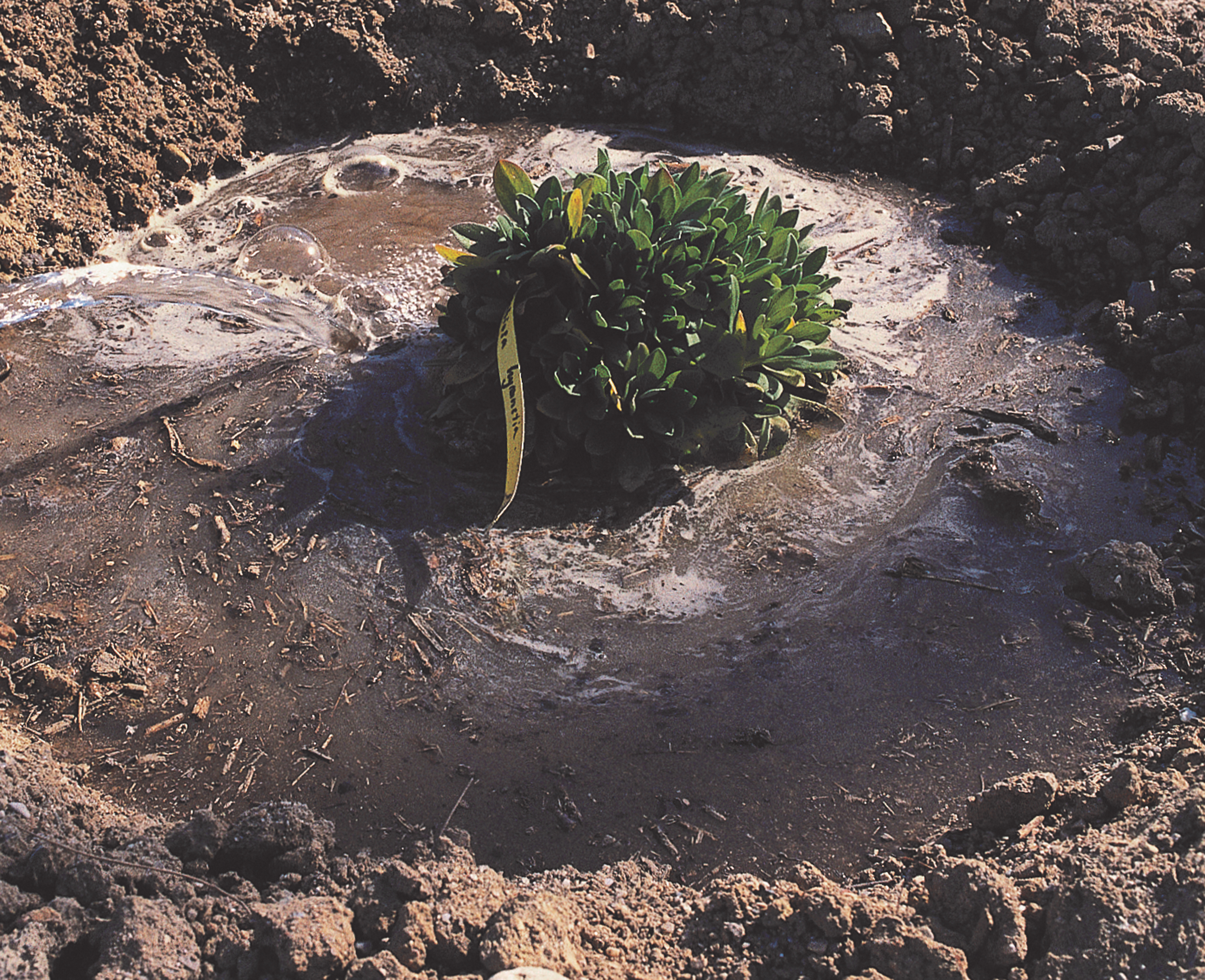 Create a trench around the plant before watering initially (Olivier Filippi/PA)