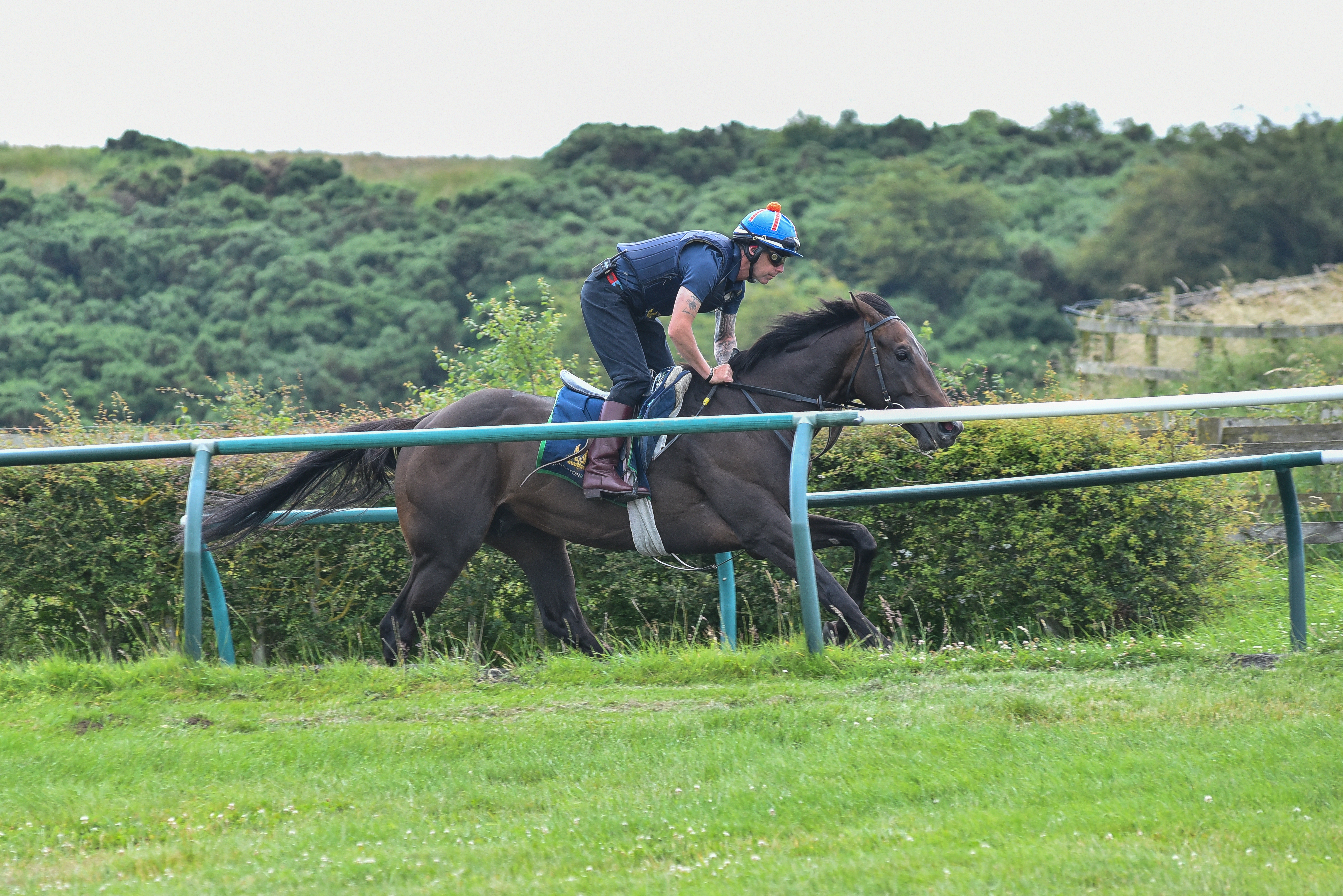 Dark Vision on the gallops on Wednesday morning