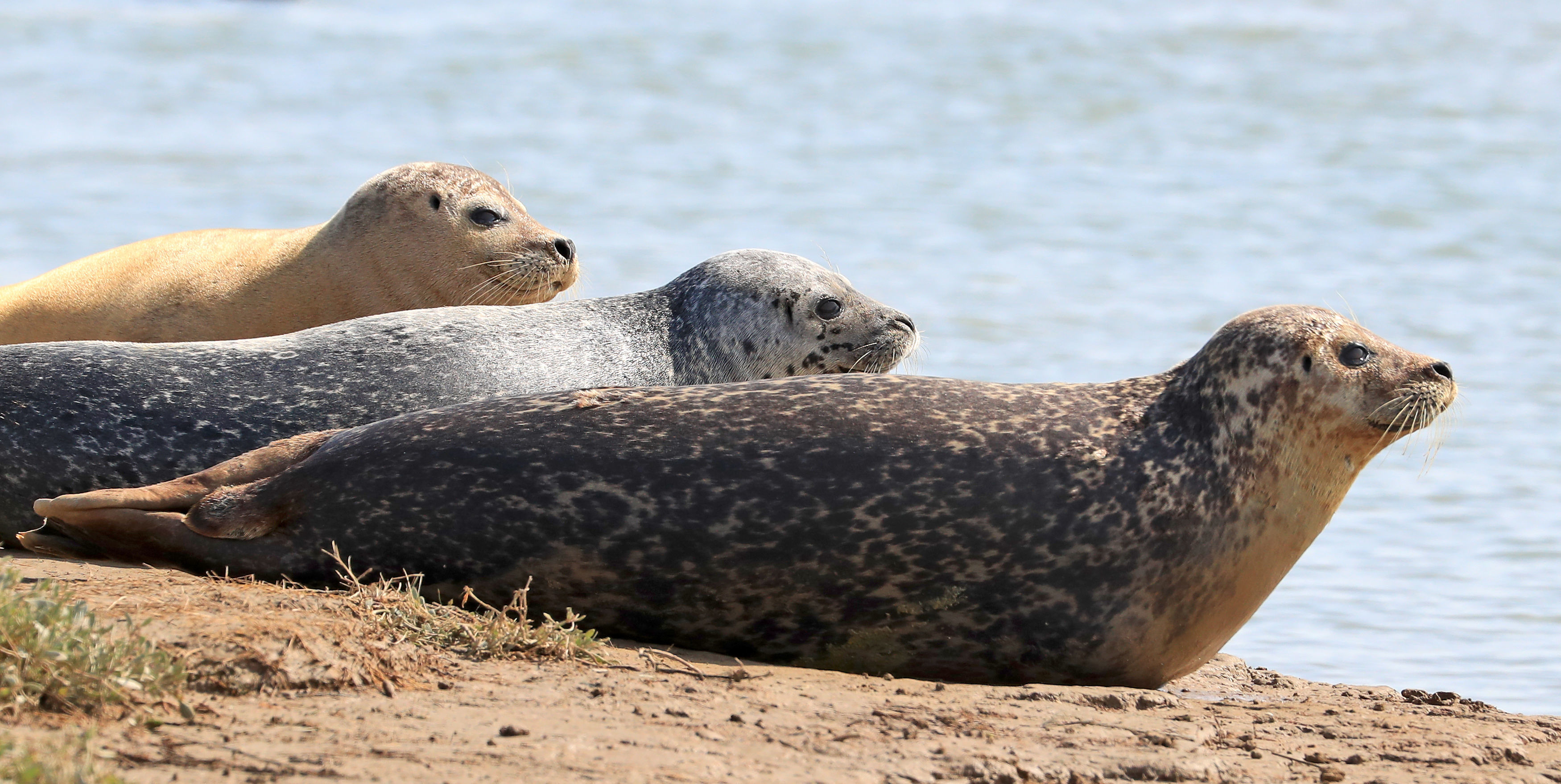 The annual seal census has been conducted since 2013 (Gareth Fuller/PA)