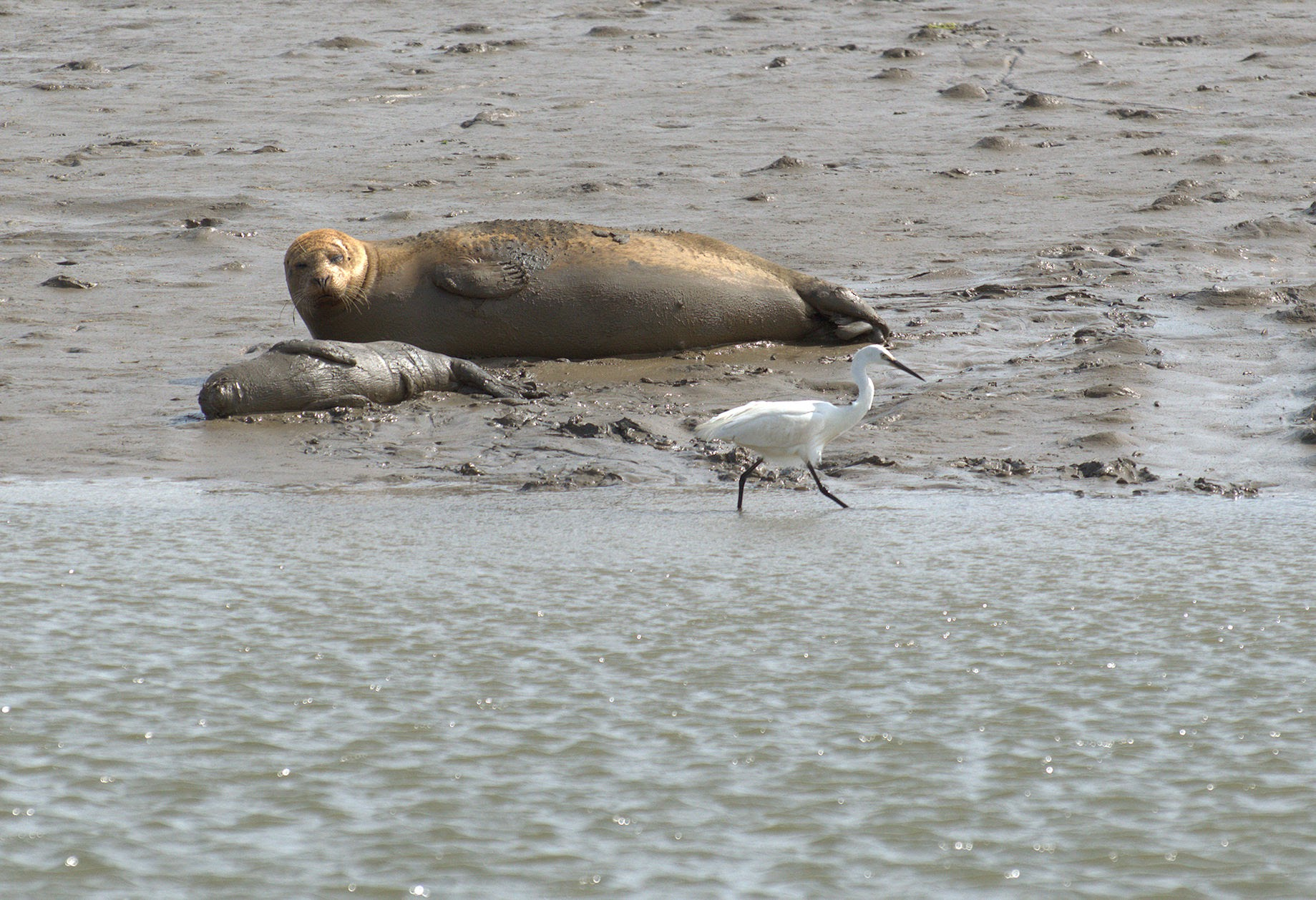 Some 138 harbour seal pups were counted in the Thames in 2018 (Graham Mee/SE RSPB/PA)