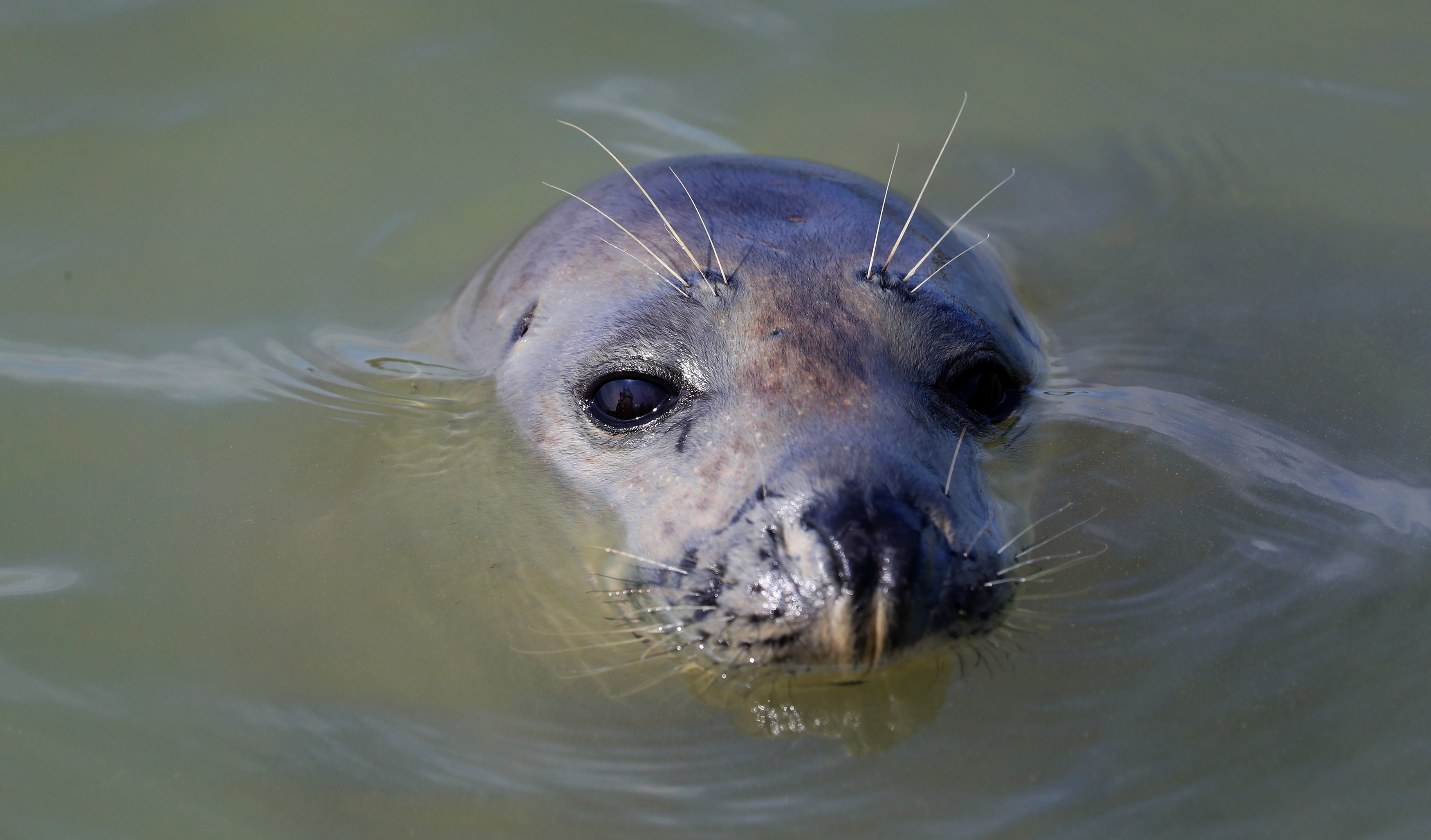 ZSL have been counting the seal populations of the Thames since 2013 (Gareth Fuller/PA)
