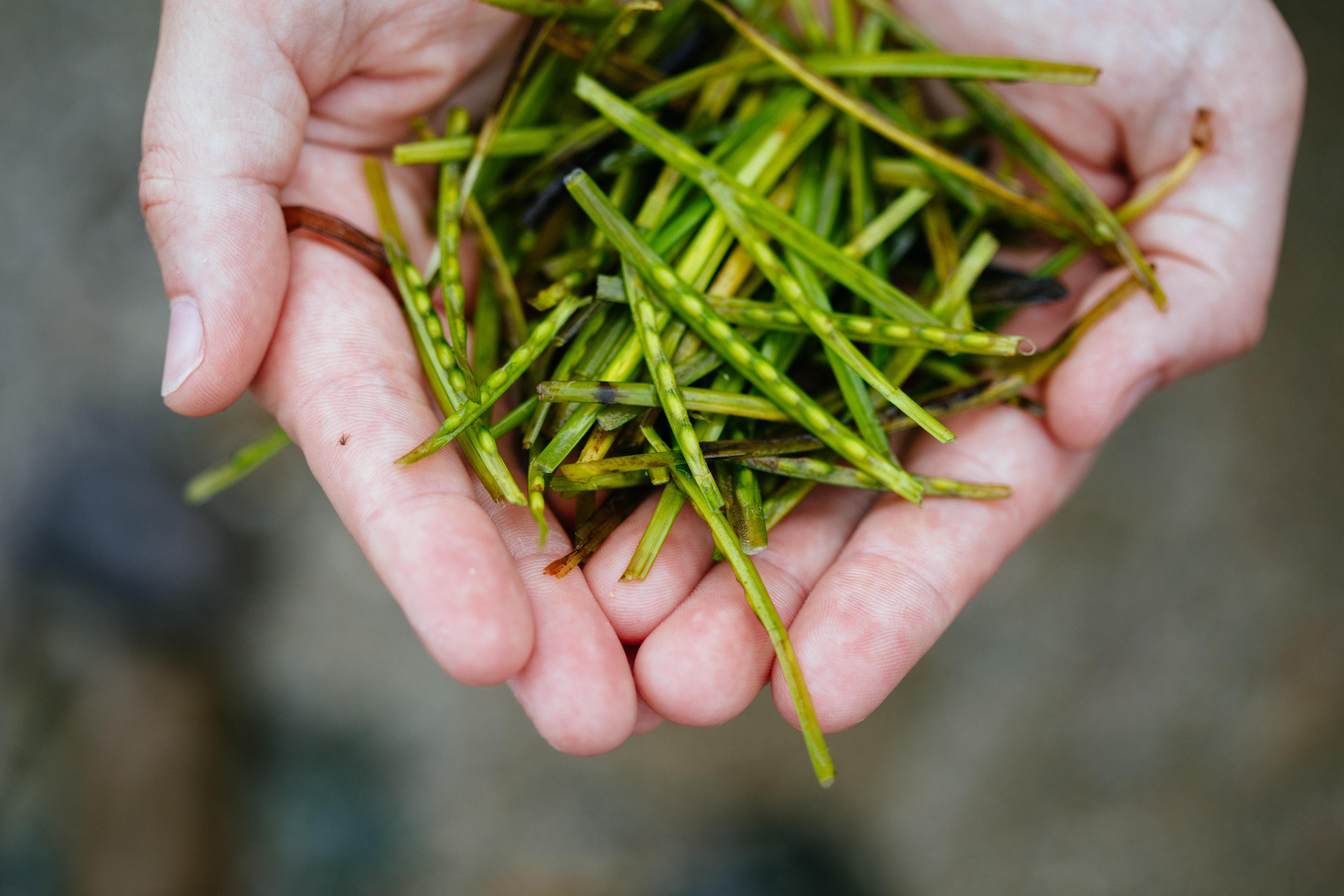 A million seagrass seeds will be used for the restoration scheme (Nina Constable/WWF-UK/PA)