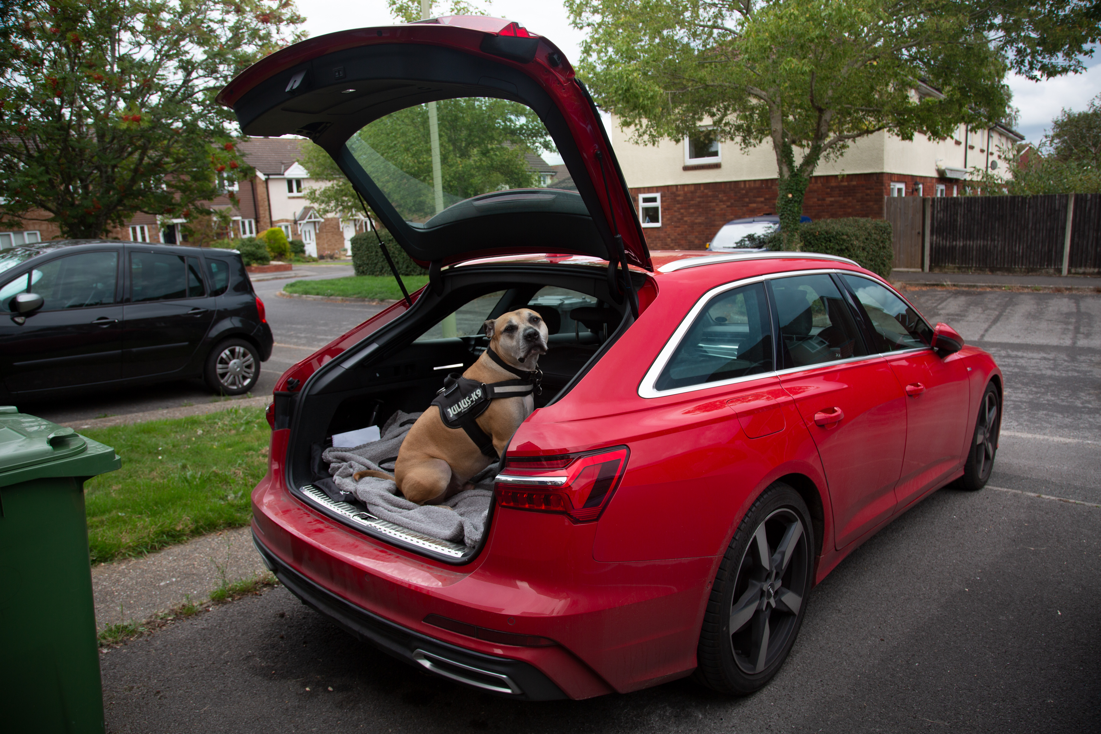 The A6 is a dog-friendly mode of transport