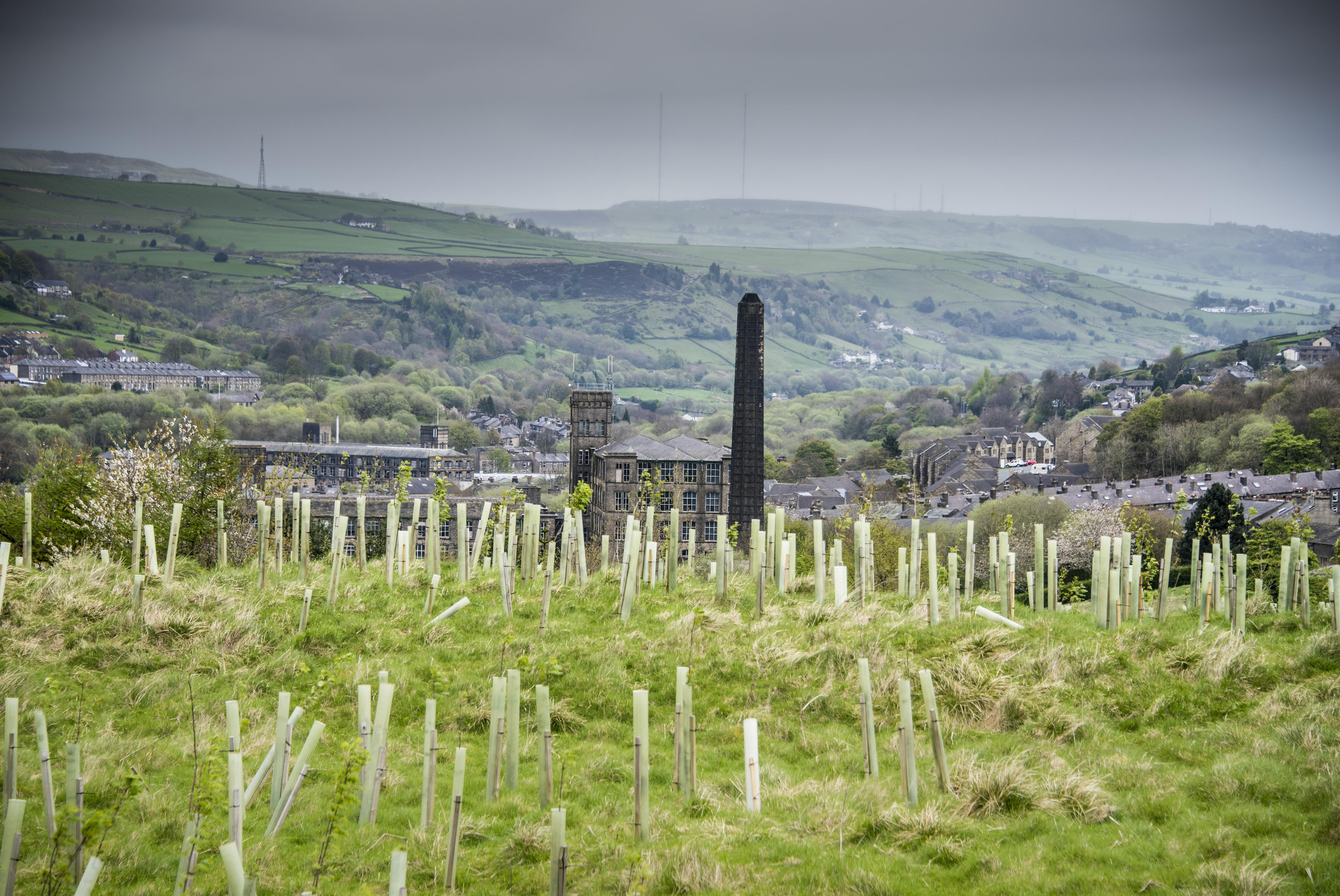 The Woodland Trust will be hosting tree planting events across the UK (Jill Jennings/WTML/PA)