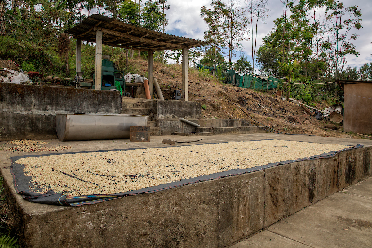 The family have invested in machinery and a concrete platform which helps the beans dry to a better quality (Eduardo Martino/PA)