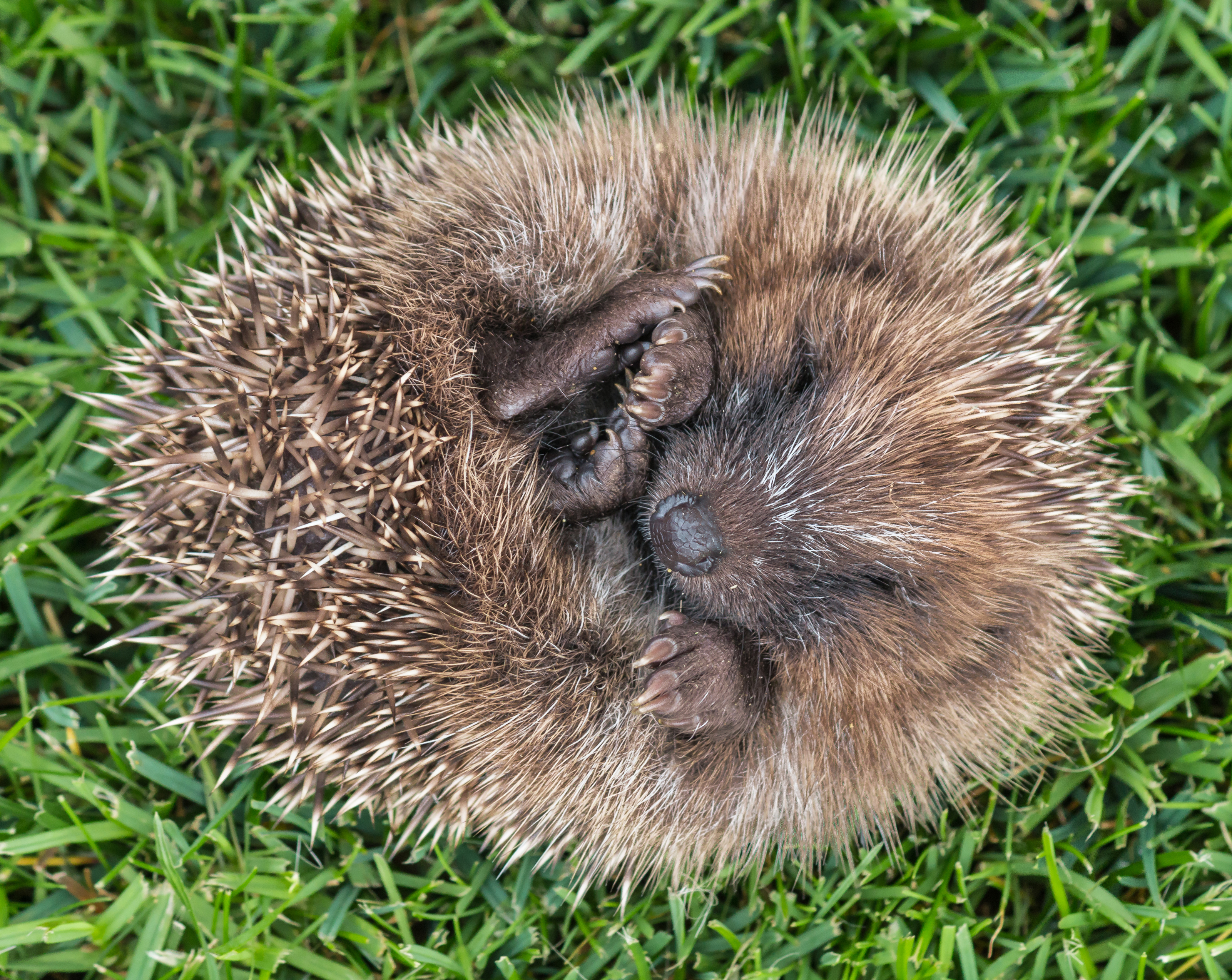 Hedgehogs will now be looking for winter shelter (iStock/PA)