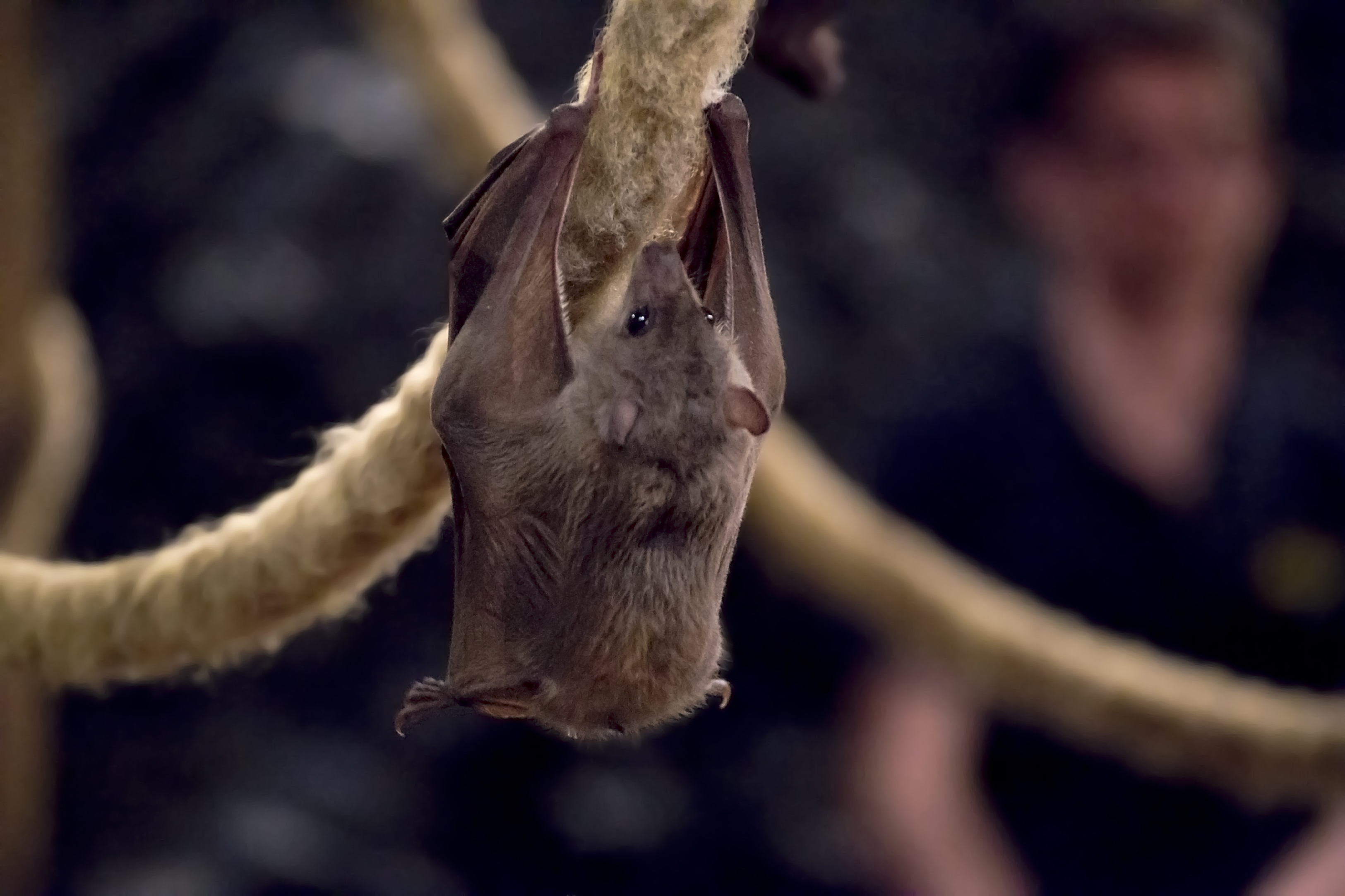 Many bats curl up in trees for the winter (iStock/PA)