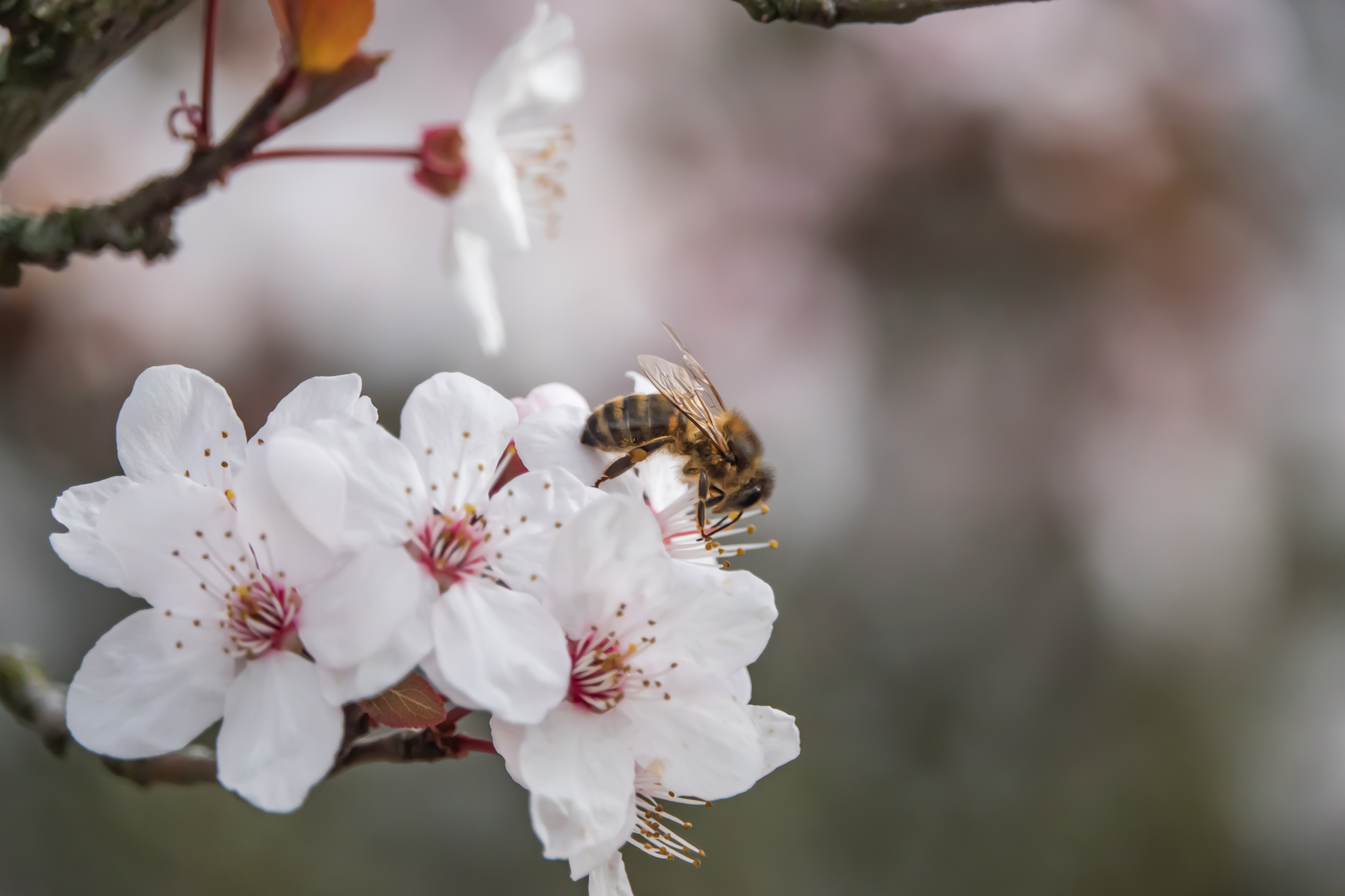 Winter flowers can help sustain honeybees (iStock/PA)