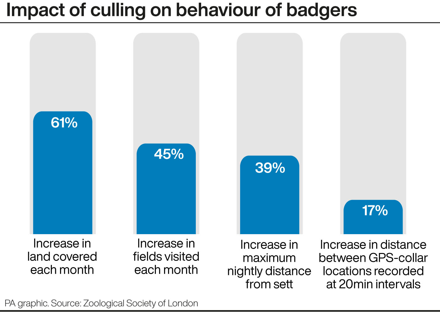 A graphic showing the impact of culling on behaviour of badgers