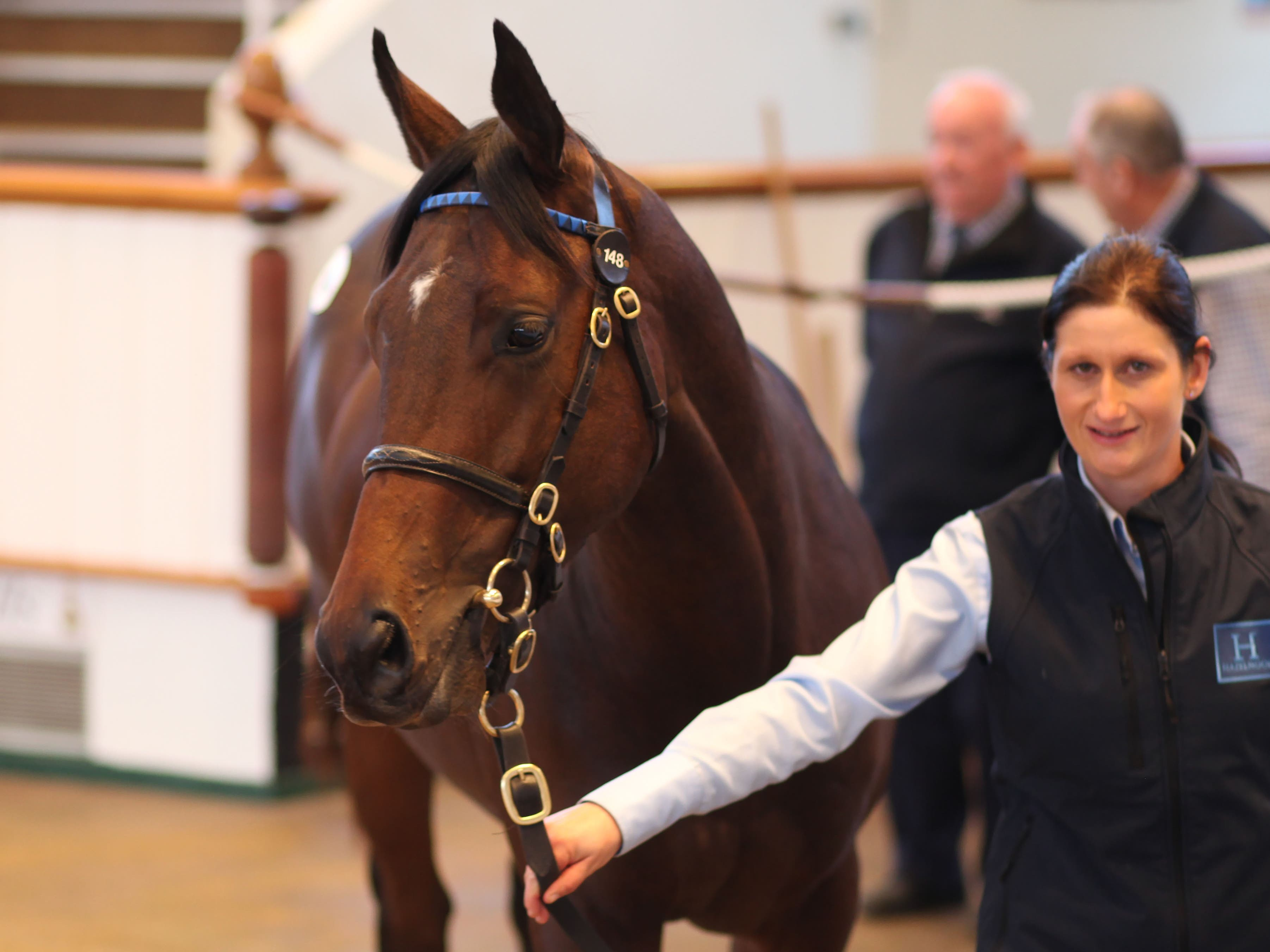 The Dubawi colt that lit up the sales at Tattersalls (Tattersalls)