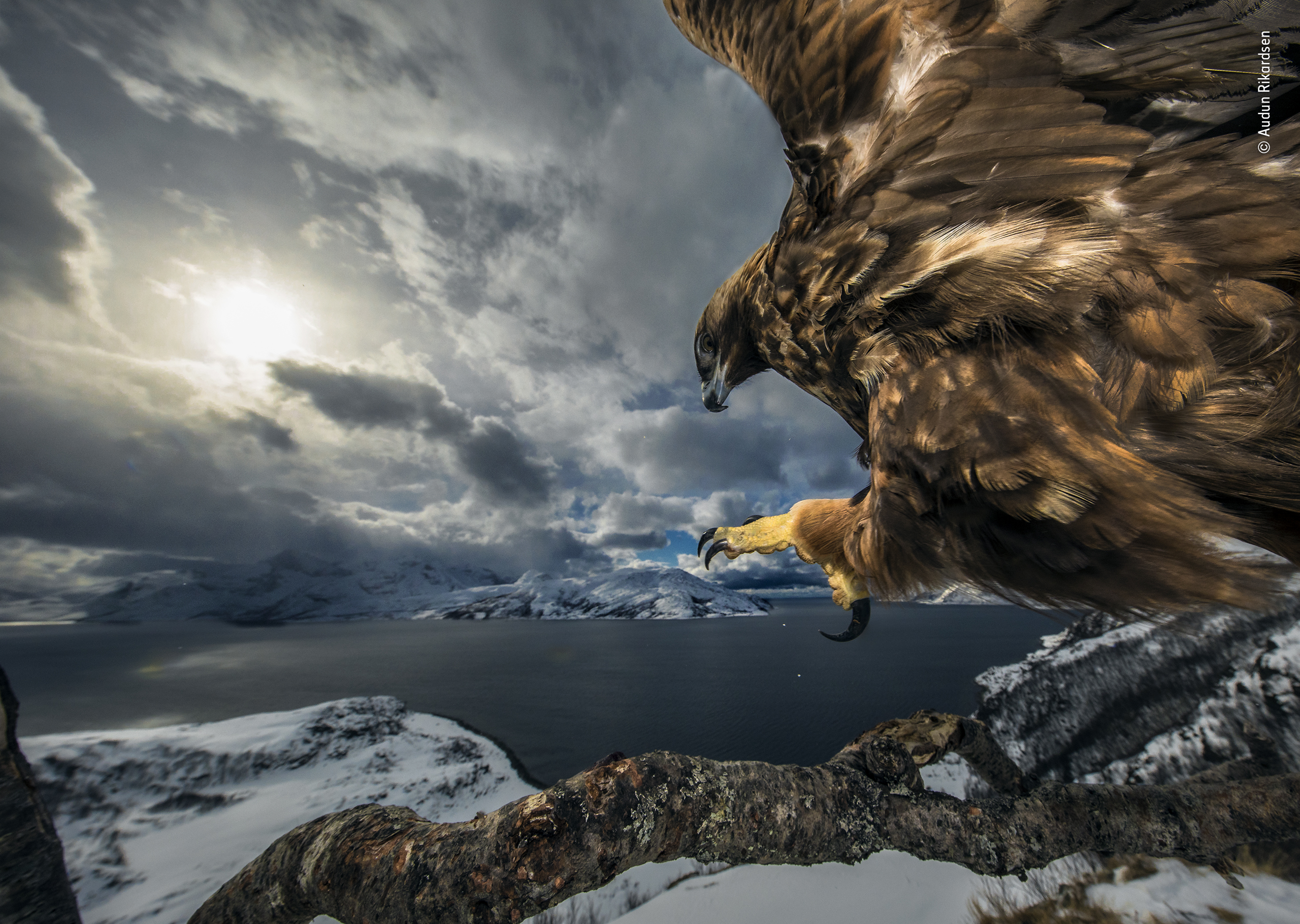 An eagle landing scooped top prize in the Behaviour: Birds category of the Wildlife Photographer of the Year competition (Audun Rikardsen/PA)