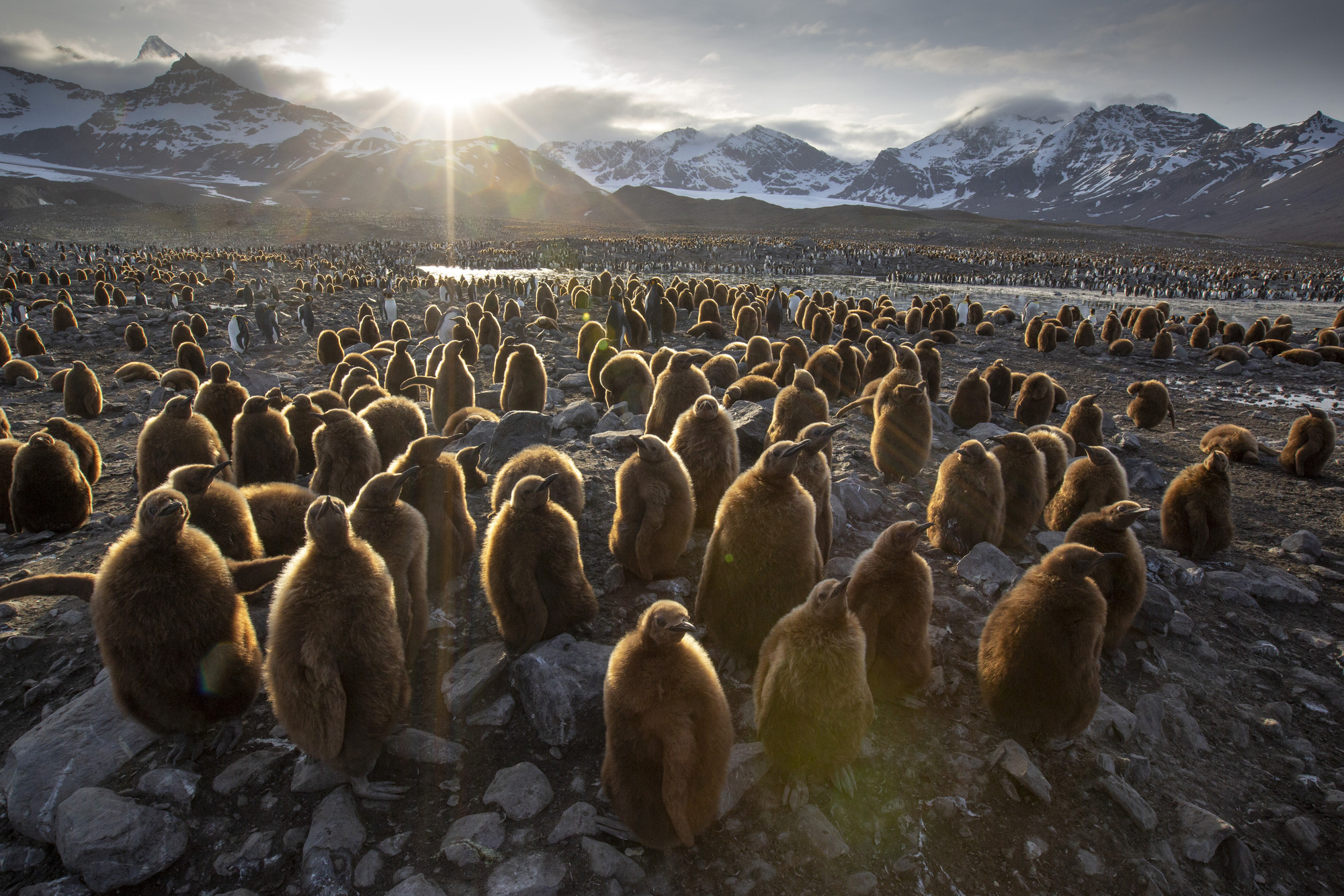 A colony of young penguin chicks wait for their parents to return with food in Seven Worlds, One Planet