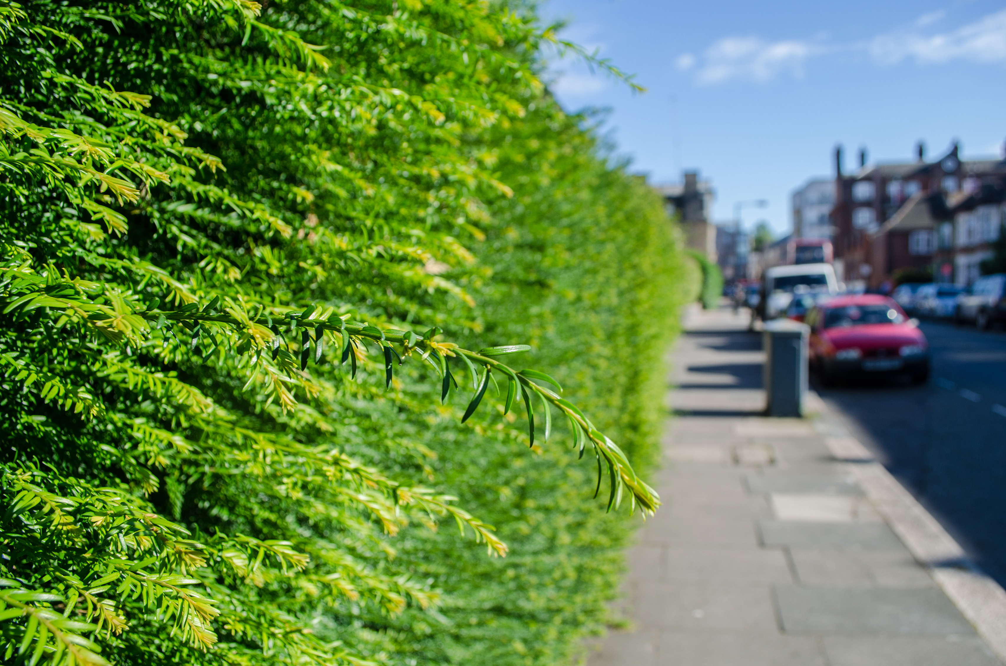 Hedges can reduce noise and pollution (iStock/PA)