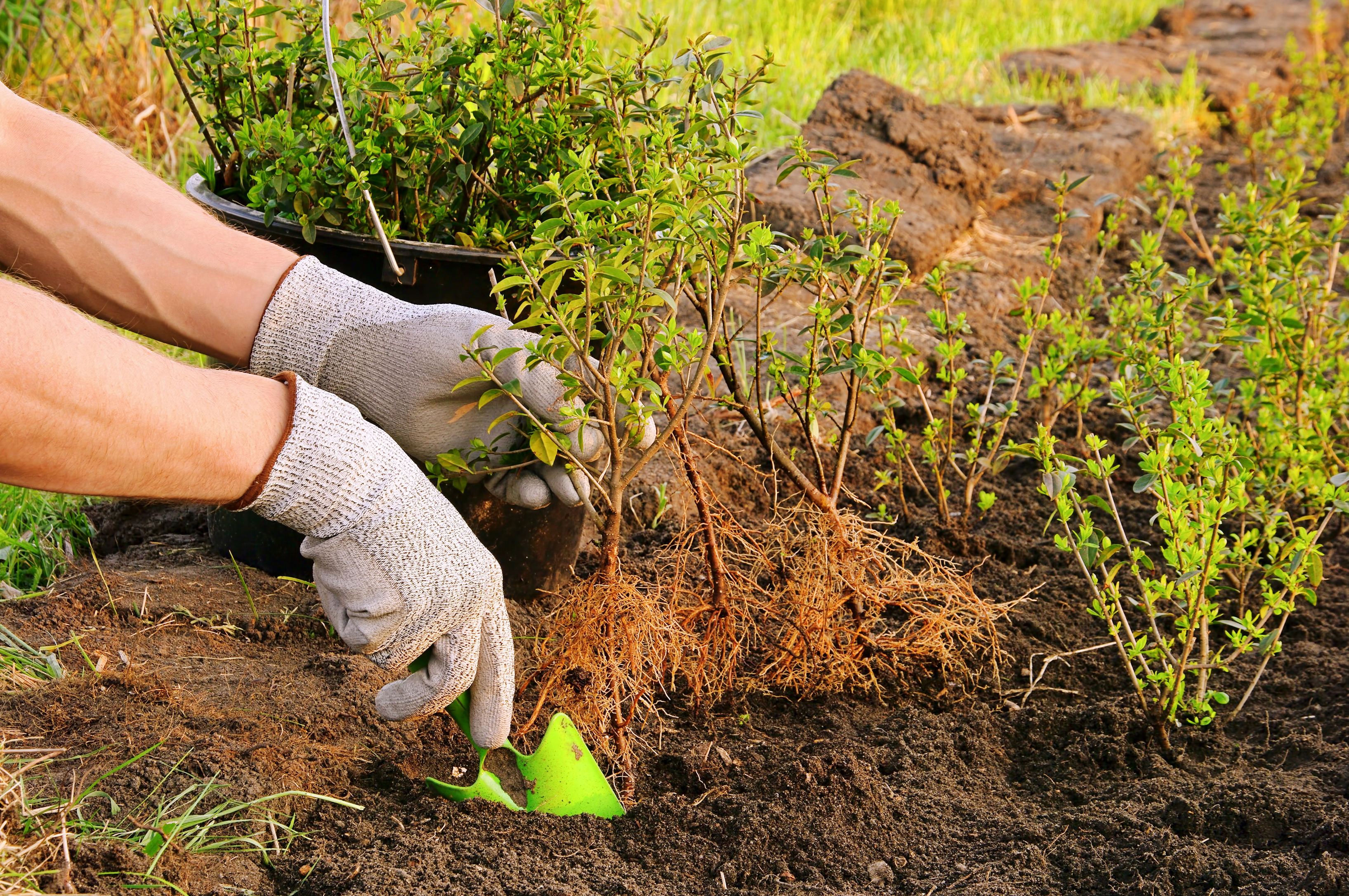 Get the depth right when planting a hedge (iStock/PA)
