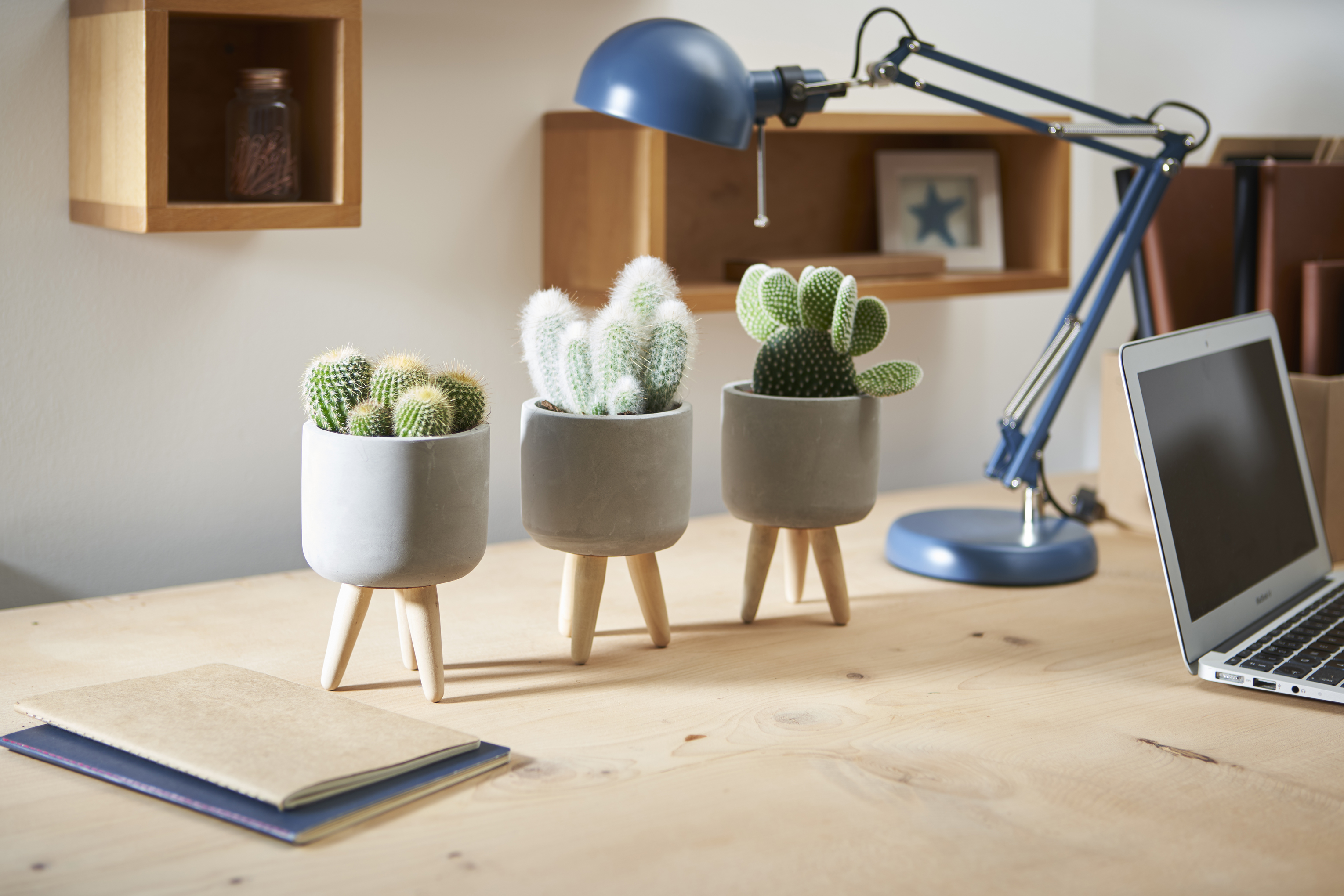 Cacti are the easiest houseplants (Suttons/PA)