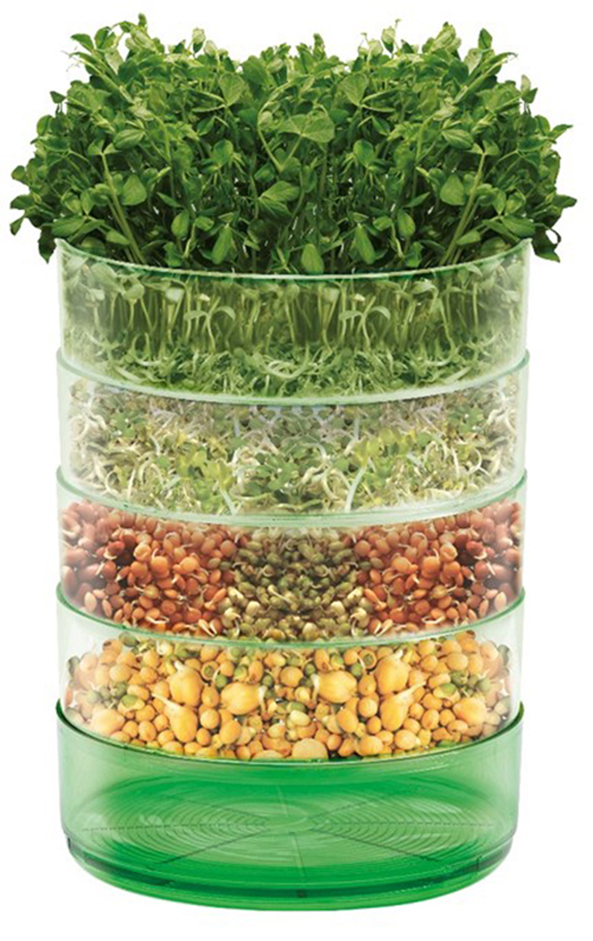 Microgreens can be grown on a windowsill (Johnsons Seeds/PA)