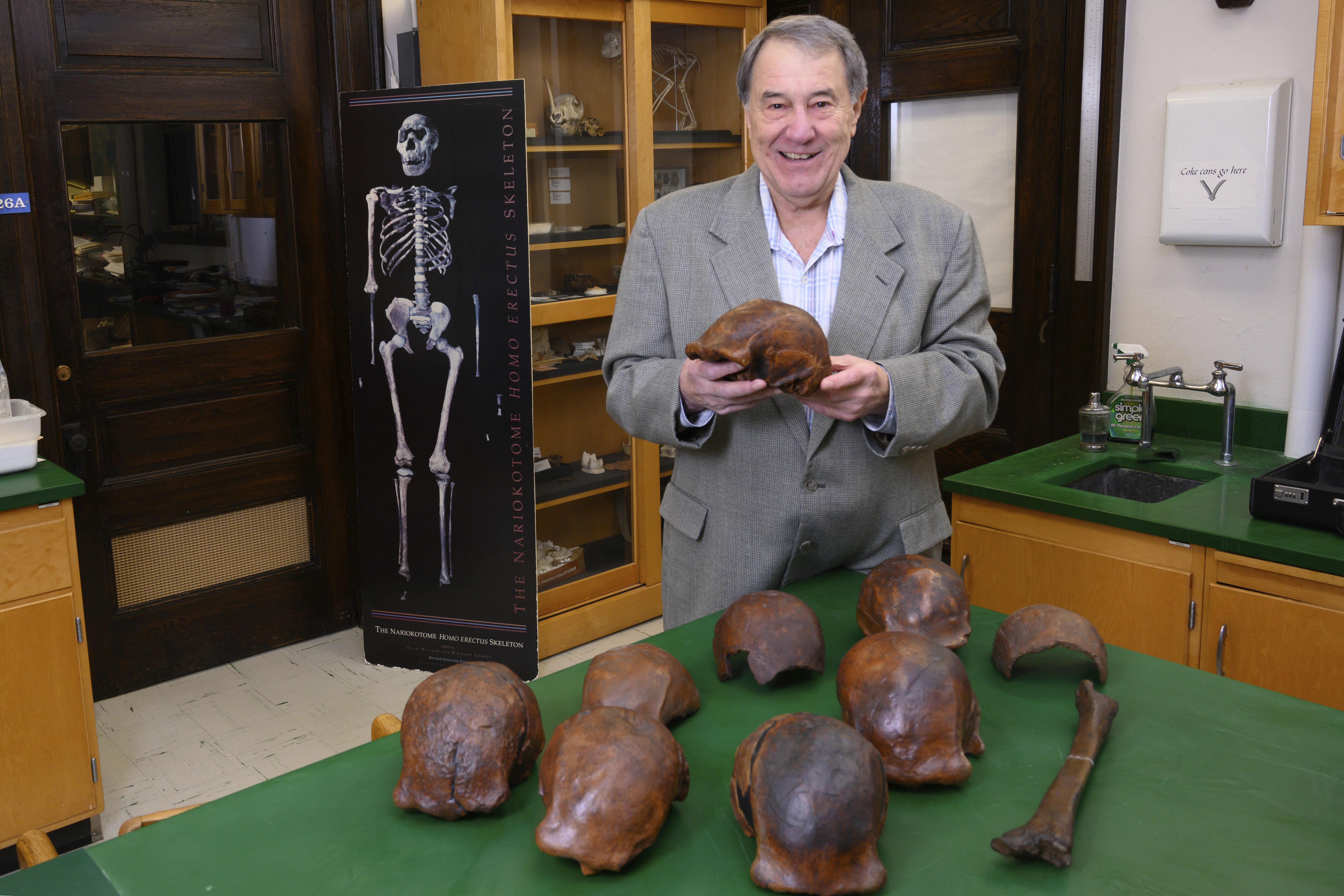 Professor Russell Ciochon holds a cast of a Homo erectus skull