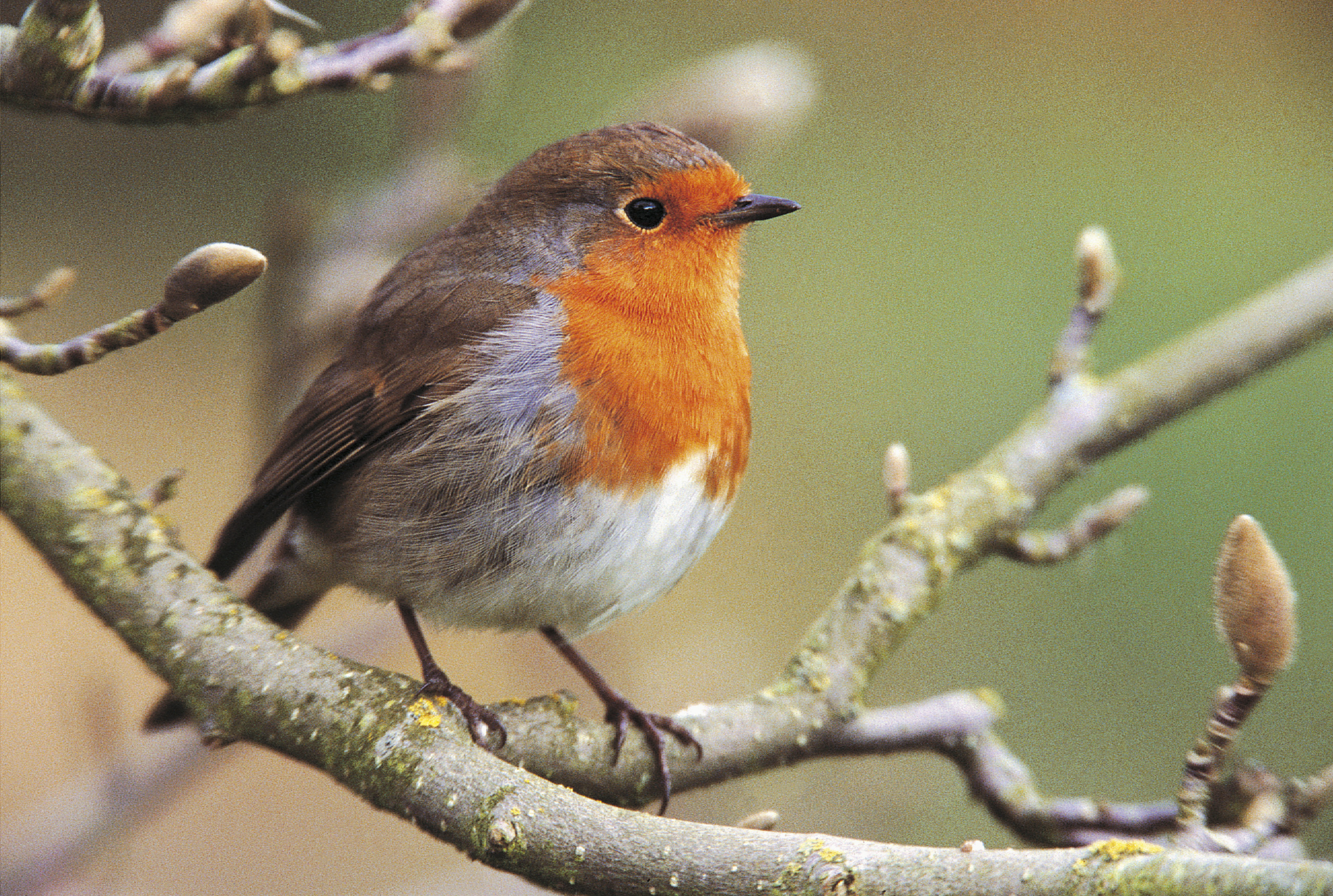 Fewer garden favourites may be in evidence in gardens in the warmer conditions (Andy Hay/RSPB/PA)
