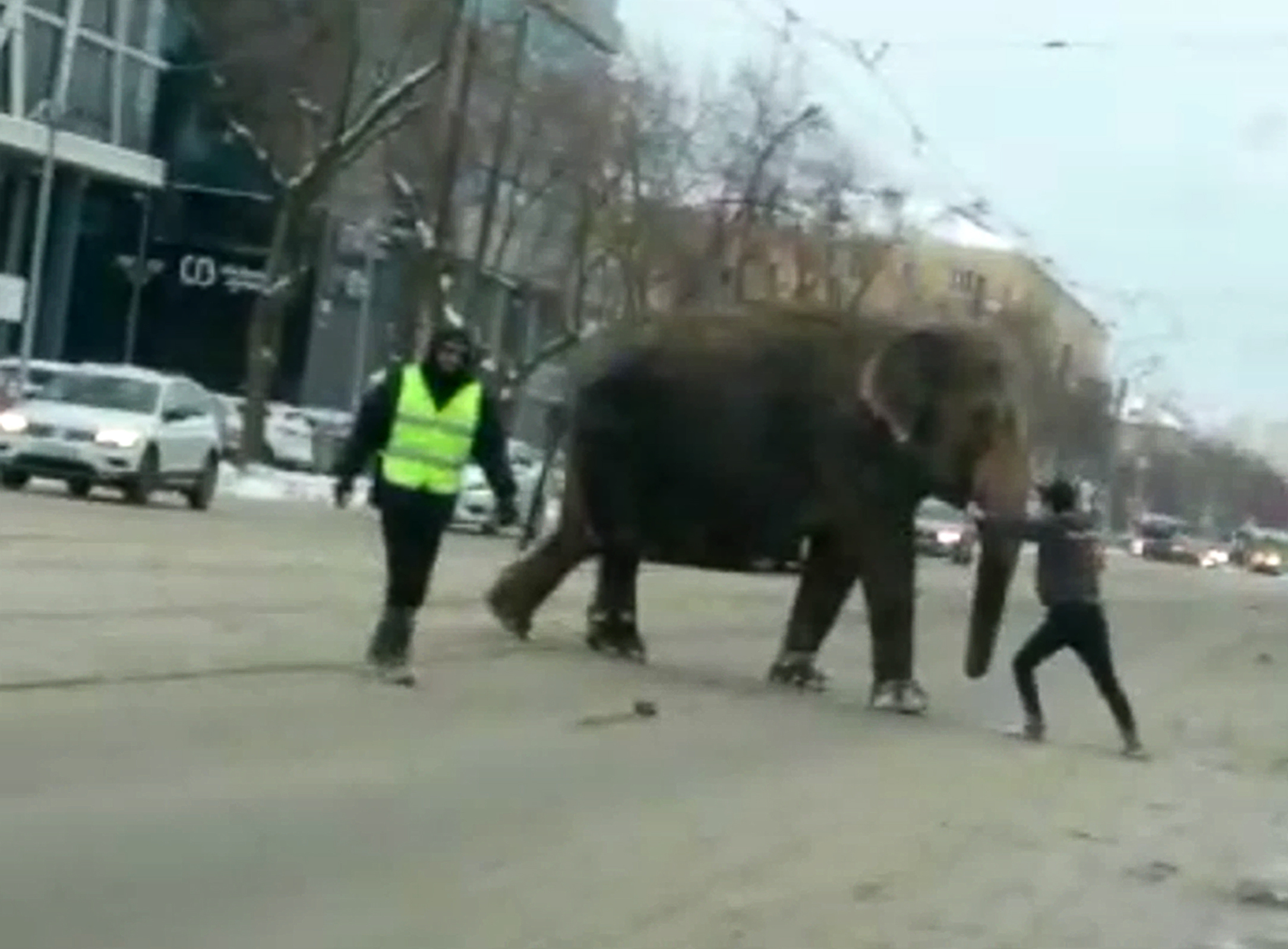 An elephant crosses the street in Yekaterinburg, Russia