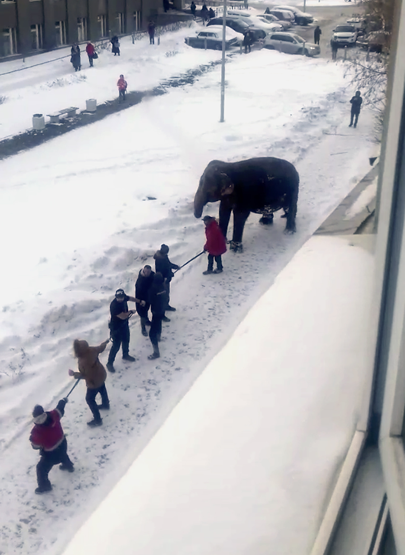 Circus workers pull an elephant in Yekaterinburg, Russia