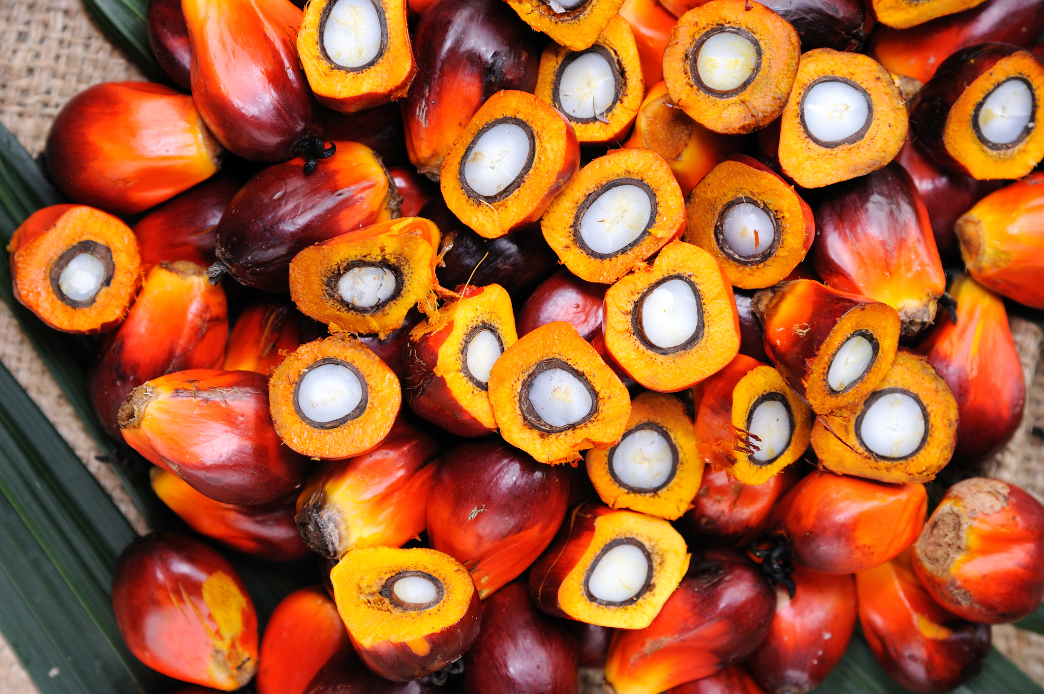 This is what palm oil seeds look like (iStock/PA)