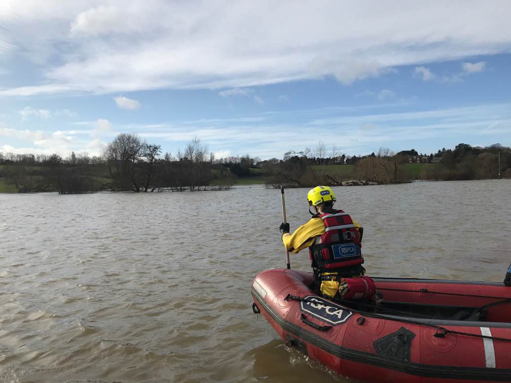 A specialist RSPCA team saved a flock of sheep in St Asaph from the floods (RSPCA/PA).