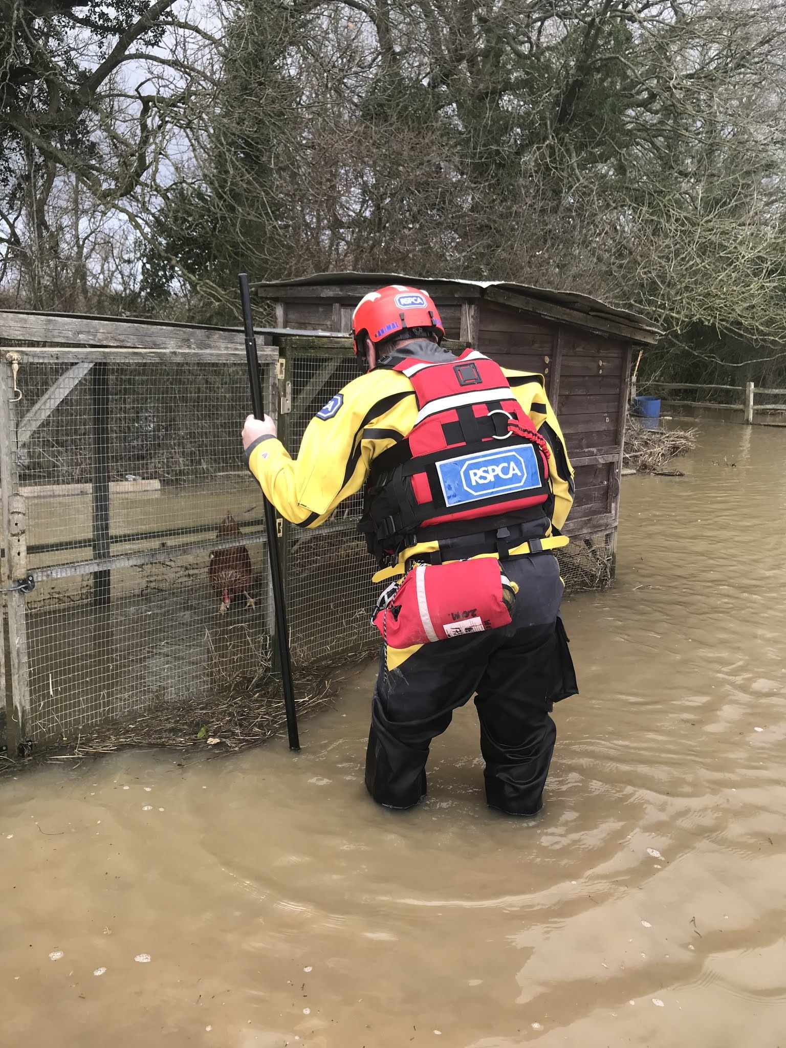The team saved six chickens which were from their flooded coups in Surrey (RSPCA/PA)