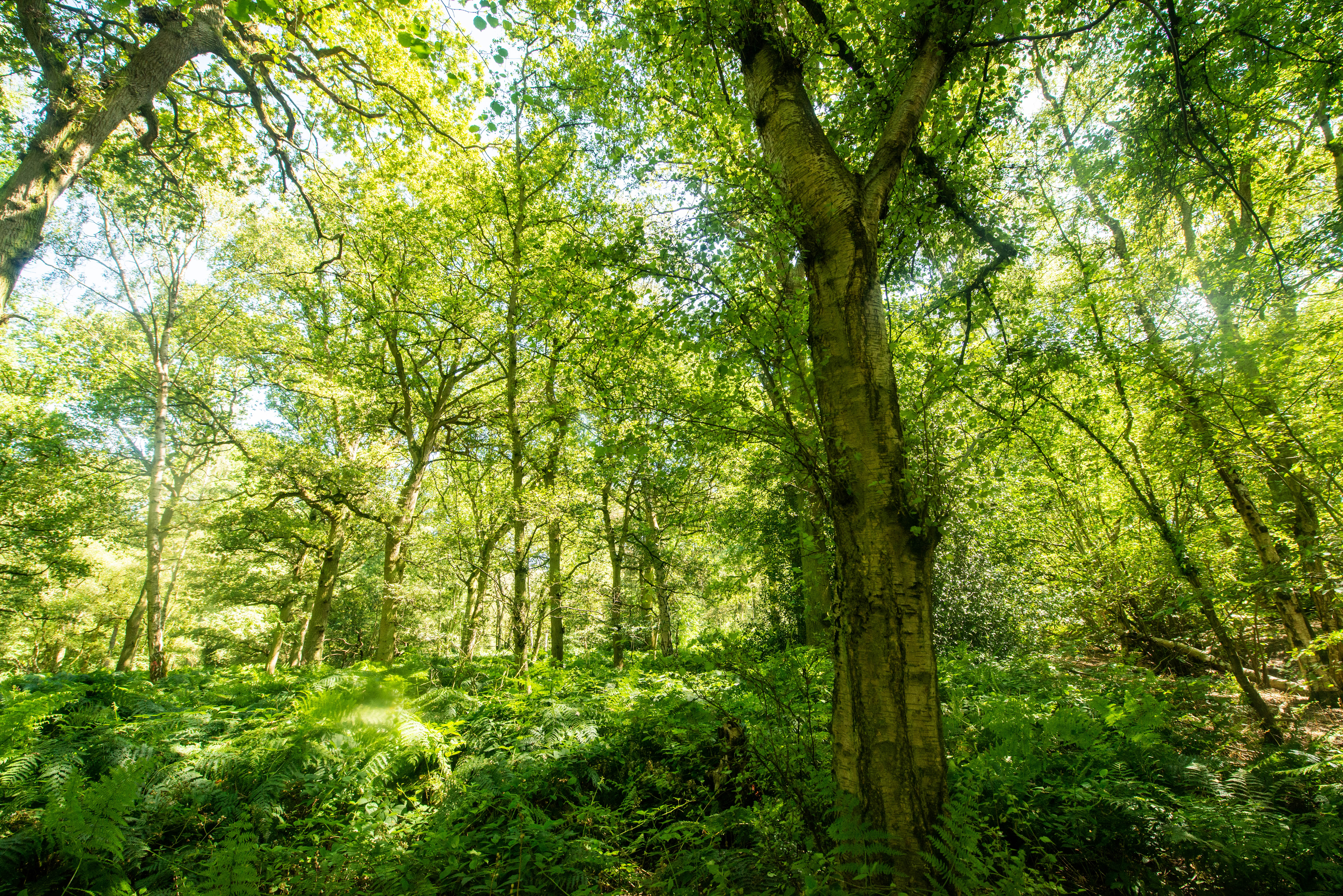 Broadwells Wood, Warwickshire, will also be affected, the Woodland Trust said (Philip Formby/Woodland Trust/PA)