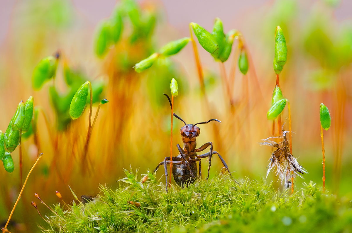 Ant Plant Guard was the winner in the welcoming gardening wildlife category (Serhii Miroshnyk)