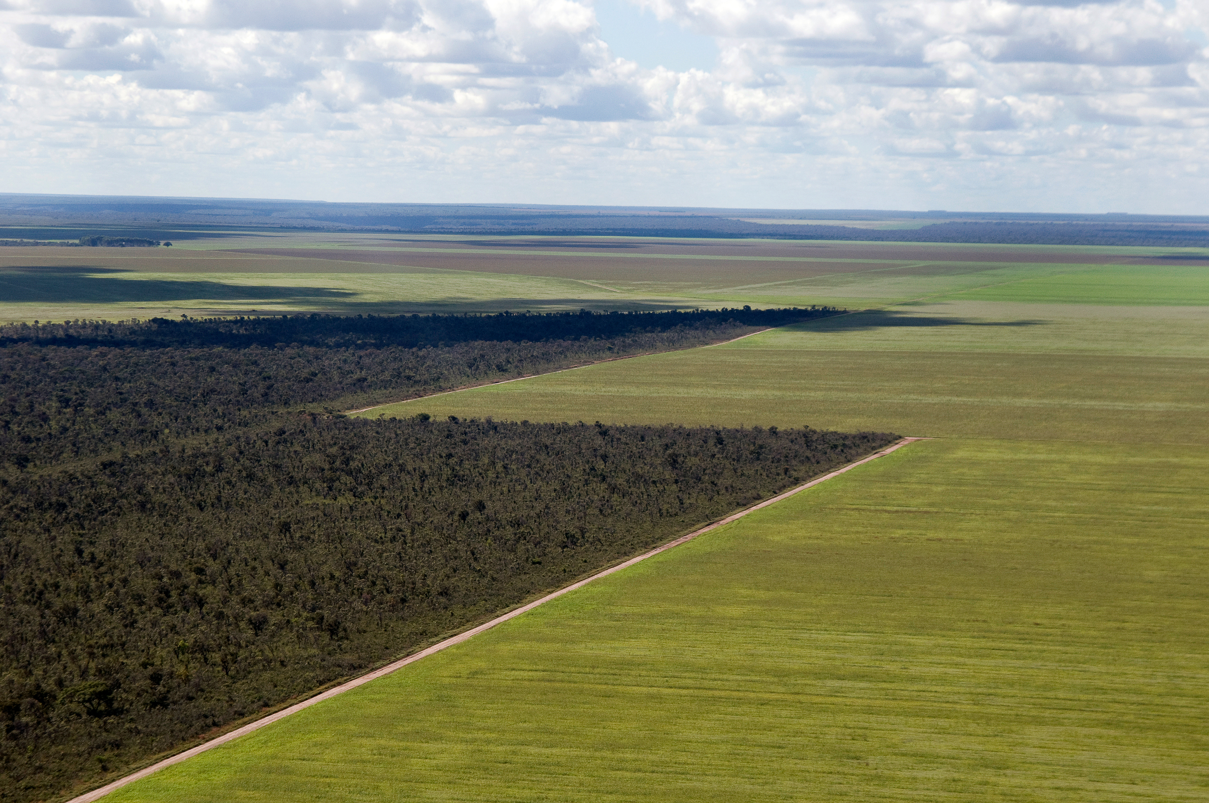 Soy plantations have encroached on the Cerrado in Brazil (Adriano Gambarini/ WWF-Brazil)
