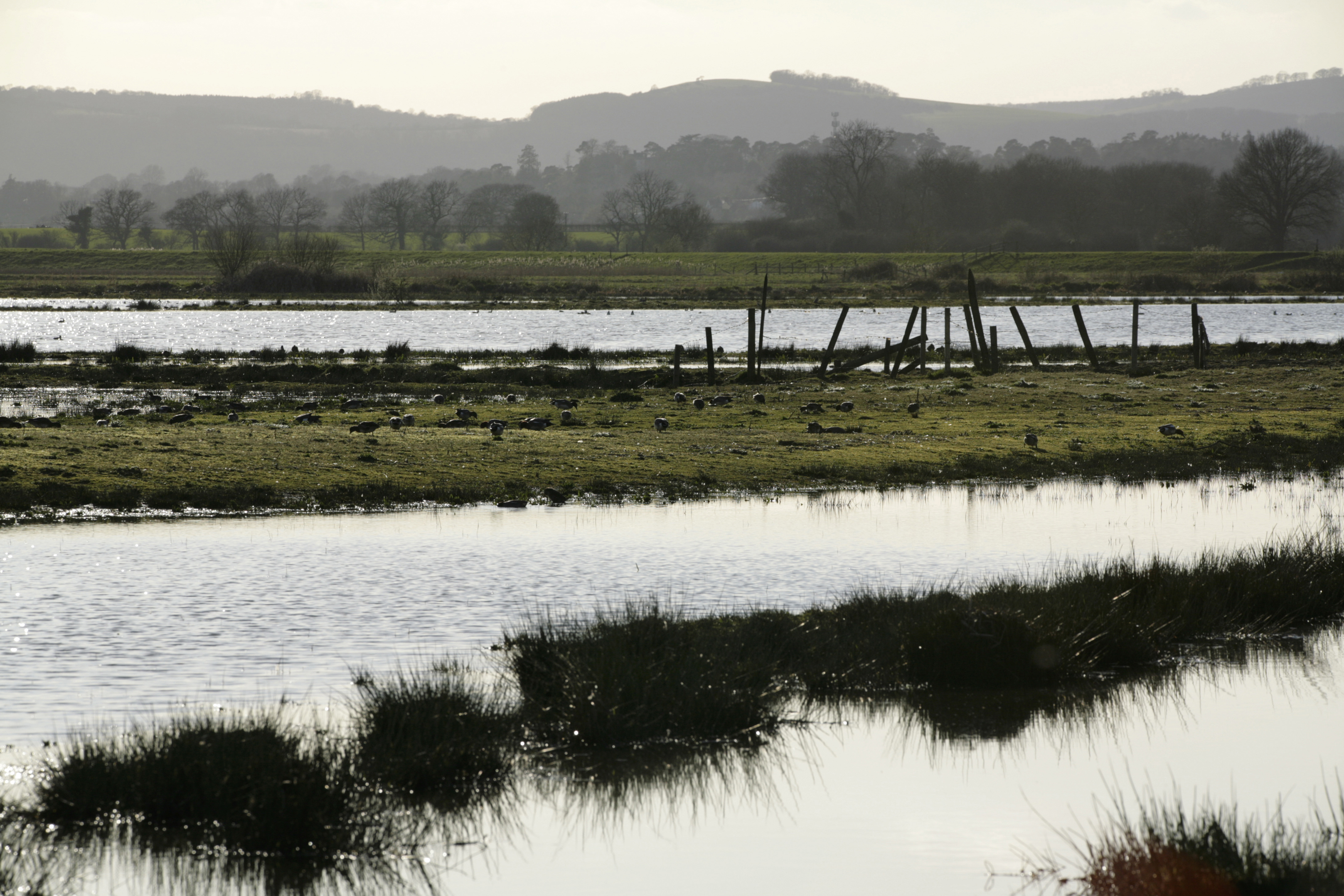 The scheme aimed to establish a new colony at Pulborough Brooks RSPB reserve (Andy Hay)