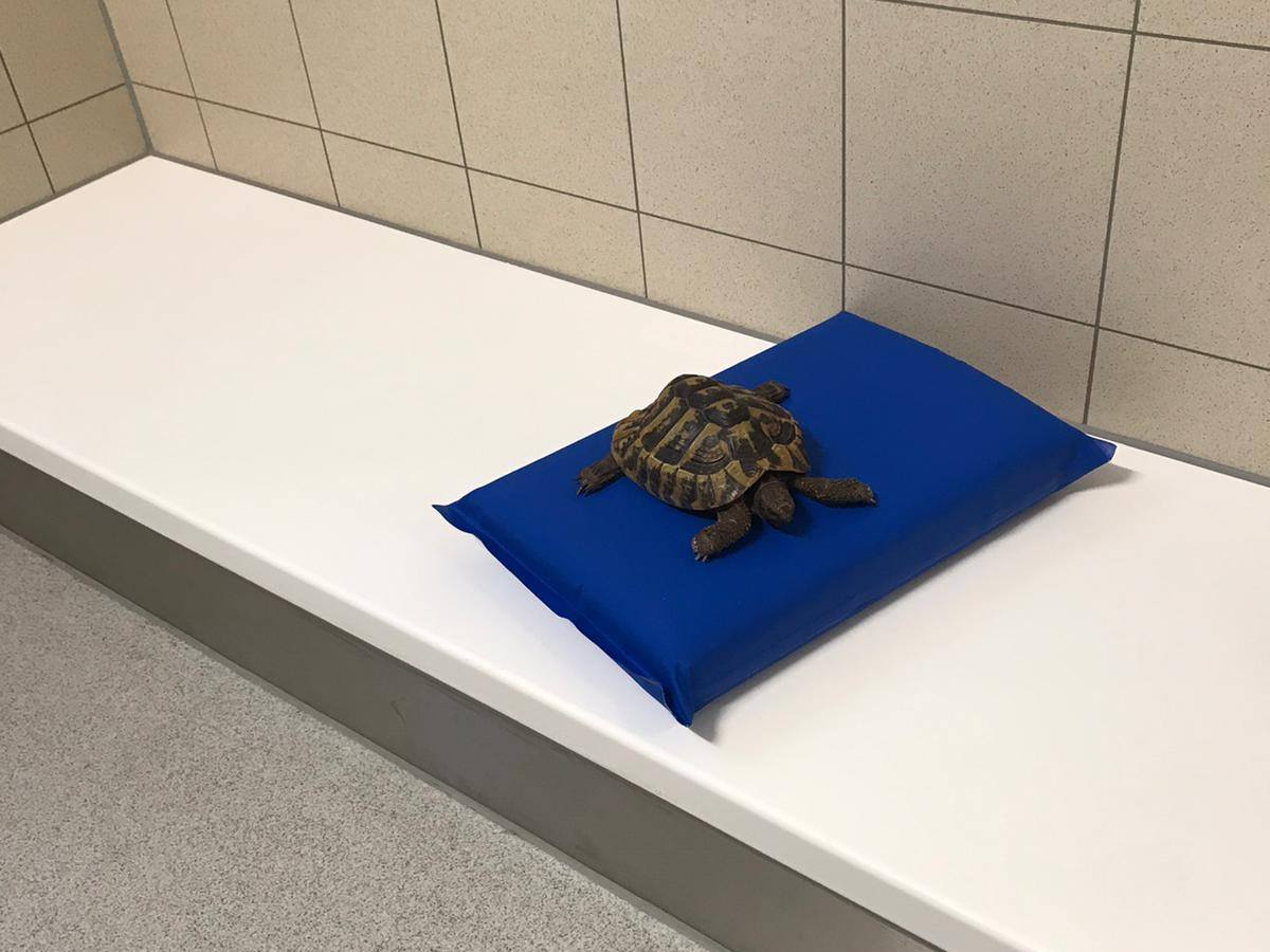 A tortoise at a police station