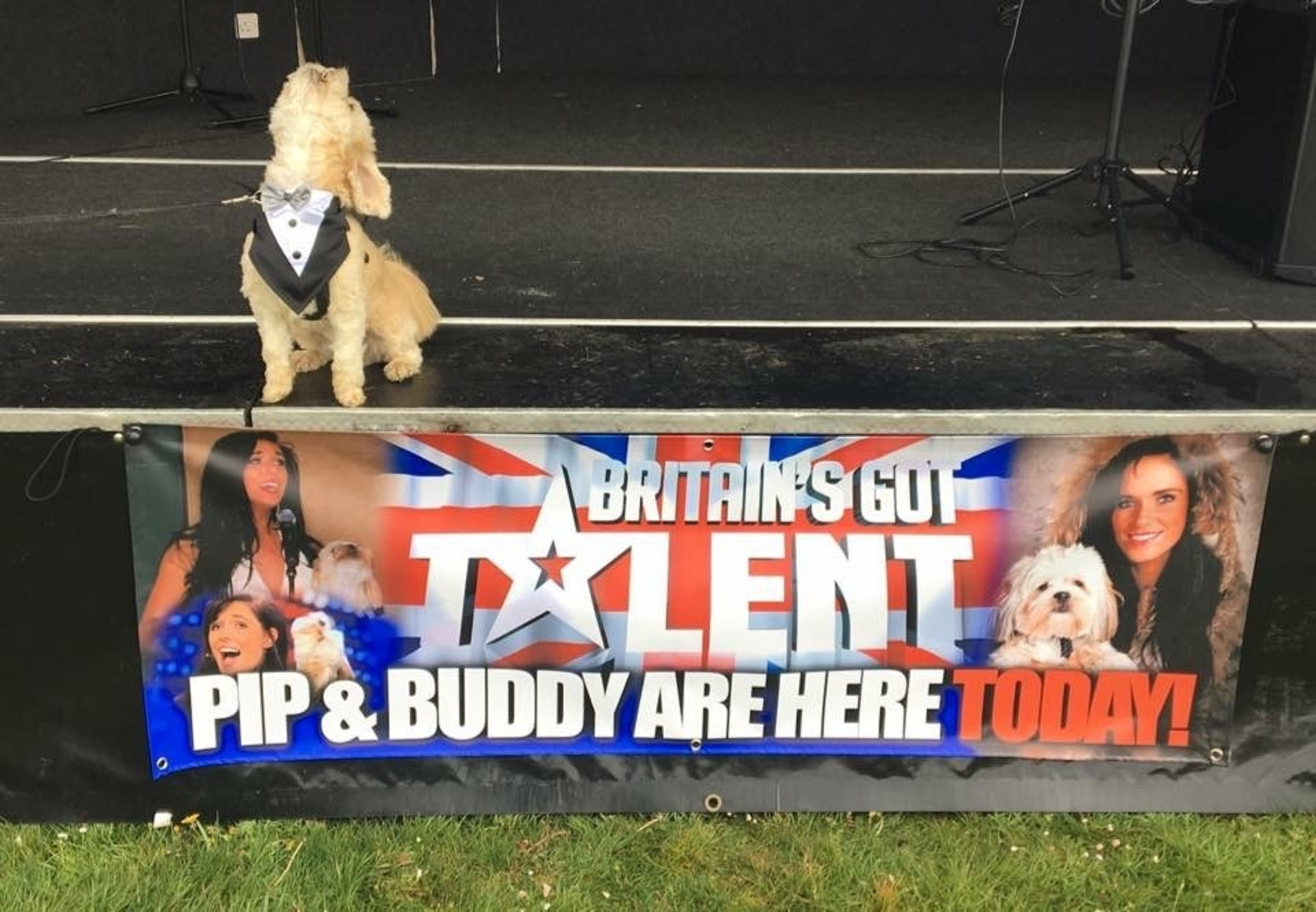 Buddy the dog, who sang with Pippa Langhorne on Britain's Got Talent