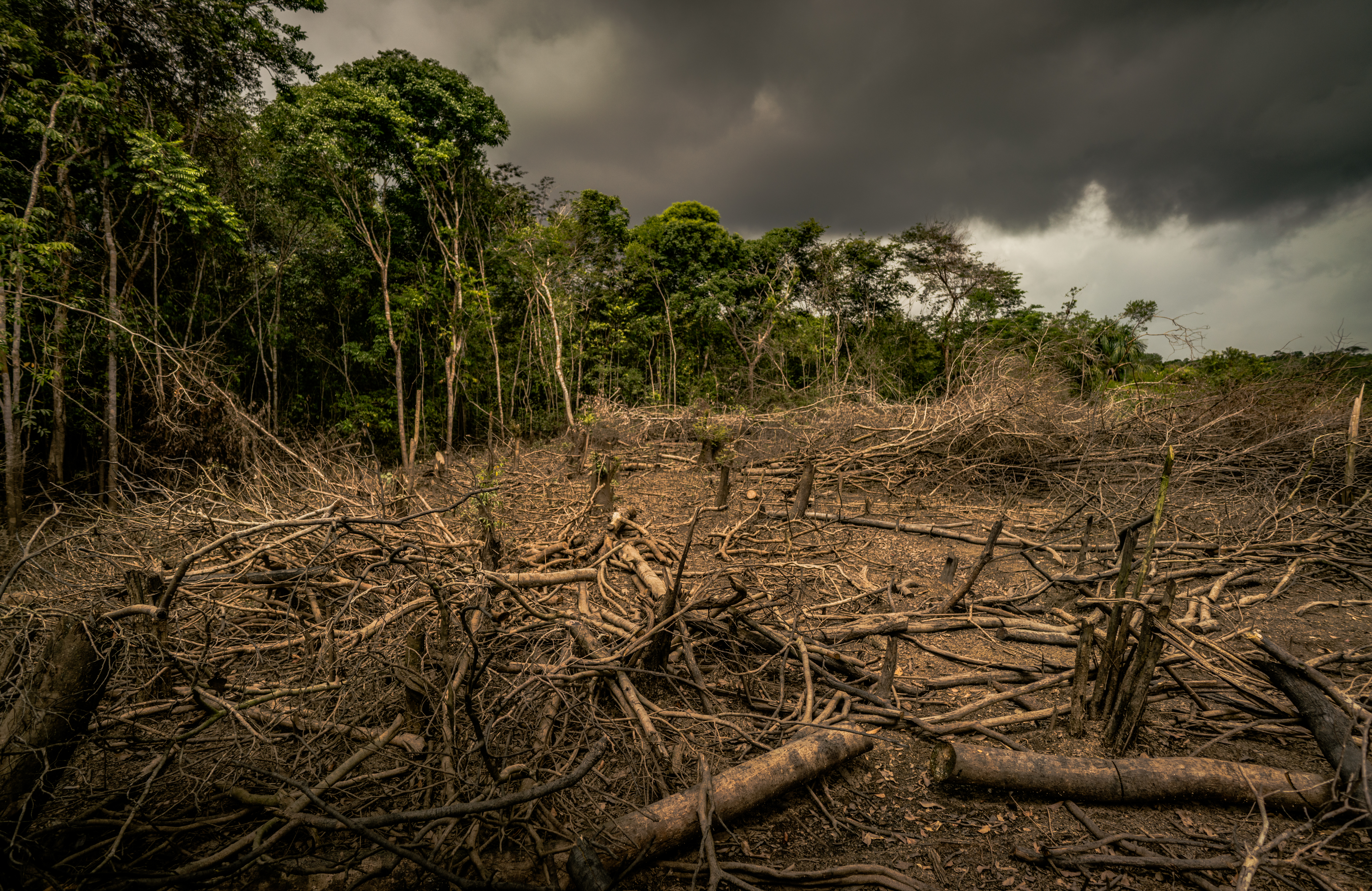 Amazon deforestation, Colombia.