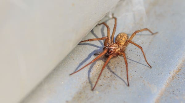 9 simple strategies to help keep spiders out of your home