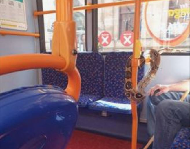 A man with a snake on a bus