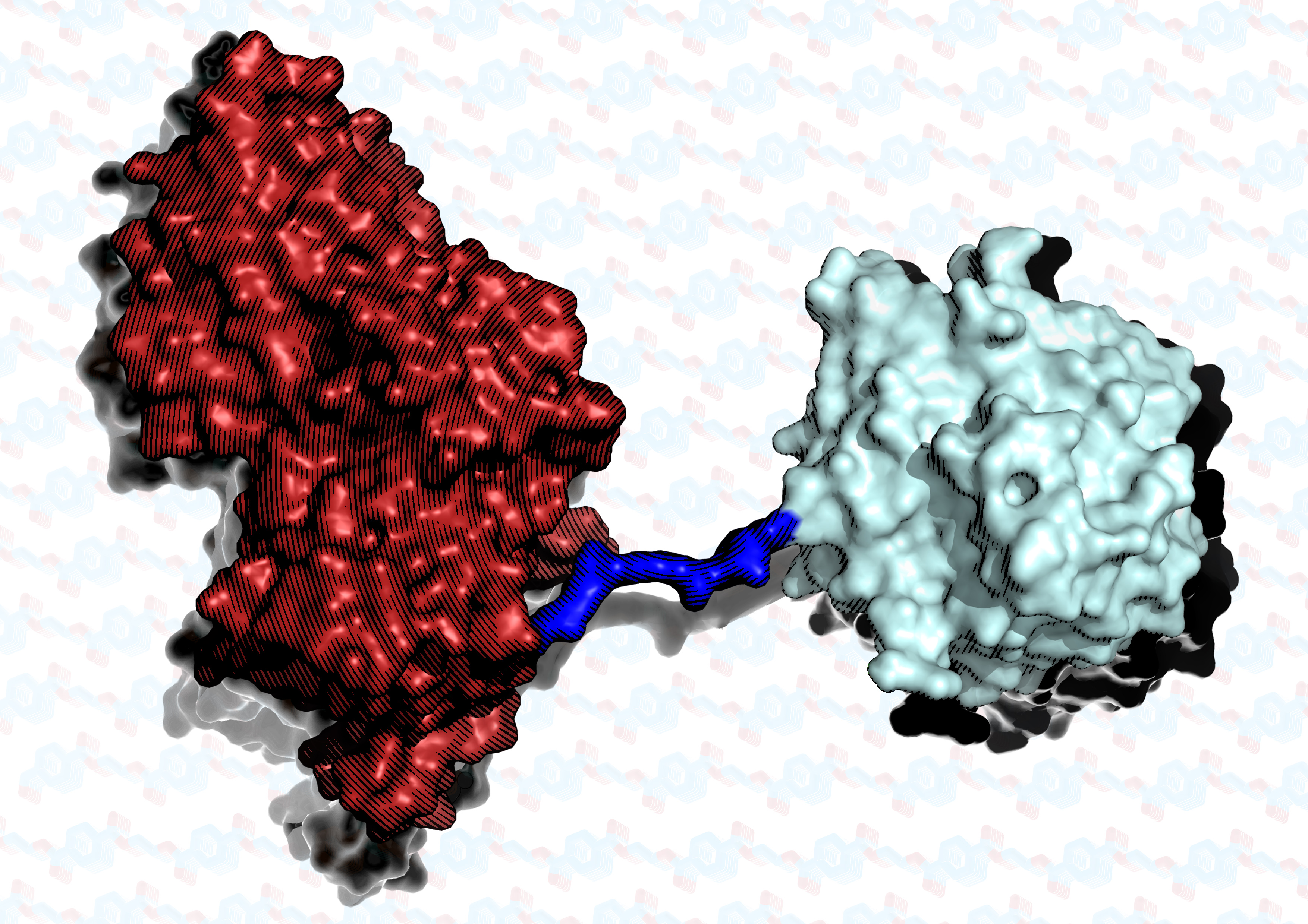 The super enzyme is two proteins joined together